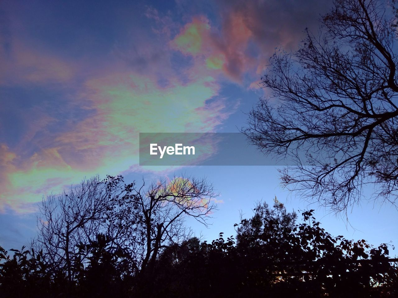 tree, sky, plant, beauty in nature, cloud - sky, tranquil scene, tranquility, scenics - nature, low angle view, nature, silhouette, no people, rainbow, multi colored, bare tree, outdoors, branch, idyllic, sunset