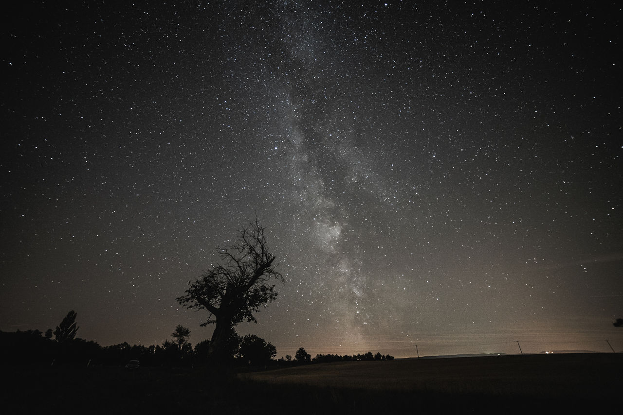 scenics - nature, beauty in nature, tranquil scene, sky, star - space, tranquility, night, tree, plant, astronomy, silhouette, space, landscape, environment, star, galaxy, idyllic, nature, field, land, no people, outdoors, milky way