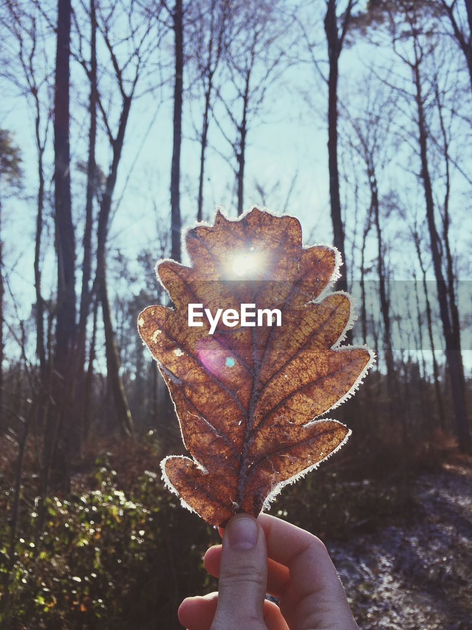 human hand, real people, holding, one person, human body part, unrecognizable person, autumn, focus on foreground, tree, personal perspective, human finger, leaf, nature, lifestyles, outdoors, bare tree, leisure activity, beauty in nature, close-up, day, winter, branch, cold temperature, maple, sky, people