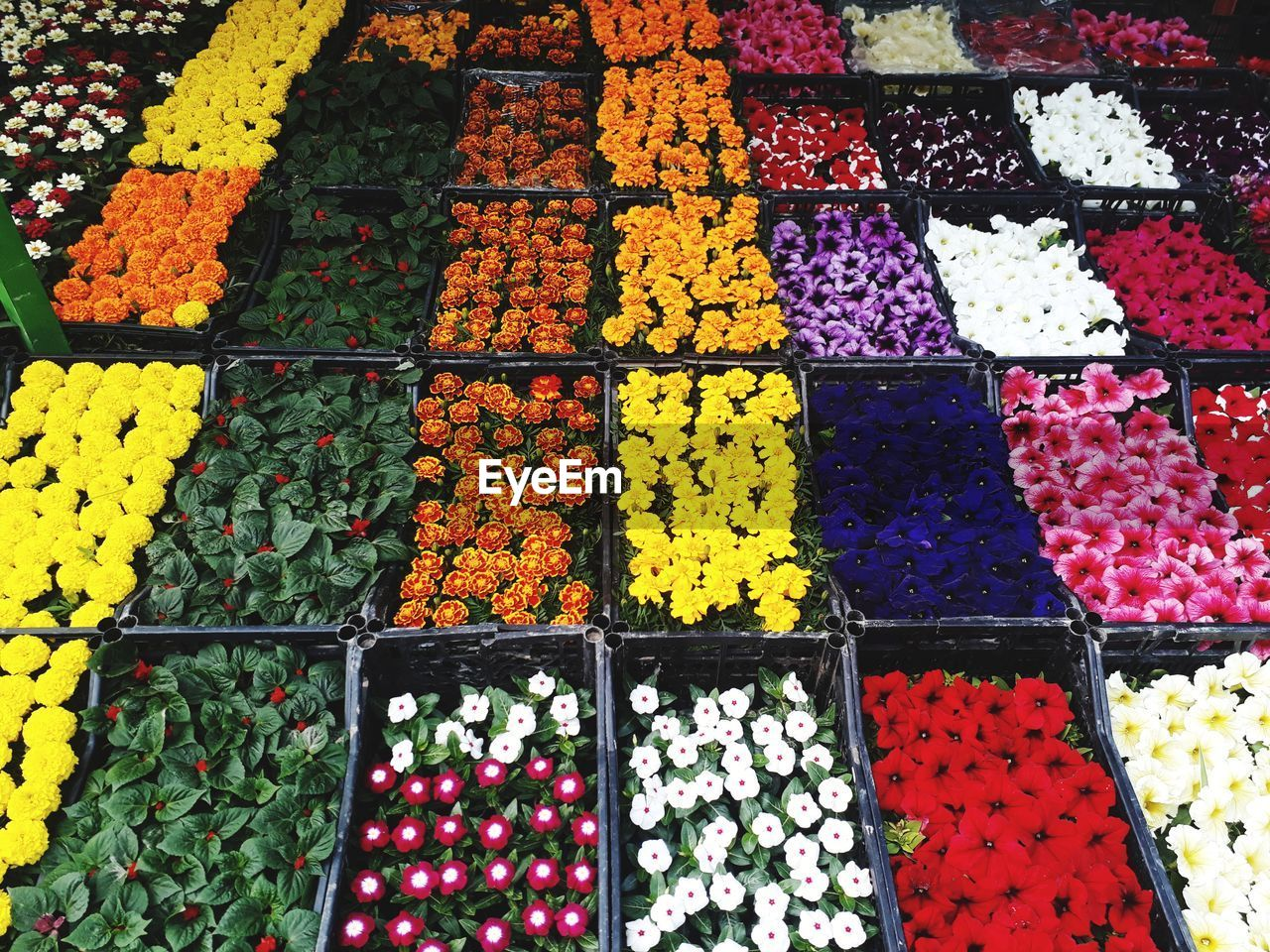 multi colored, choice, variation, high angle view, flower, retail, for sale, abundance, no people, flowering plant, arrangement, large group of objects, freshness, plant, market, full frame, in a row, backgrounds, collection, indoors, order, sale, retail display