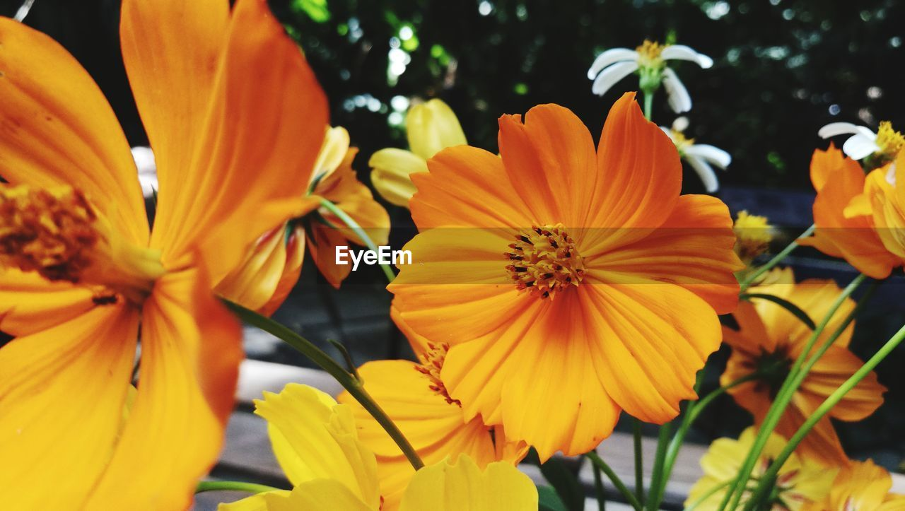 flower, petal, beauty in nature, growth, orange color, nature, flower head, fragility, blooming, freshness, outdoors, no people, yellow, day, plant, close-up