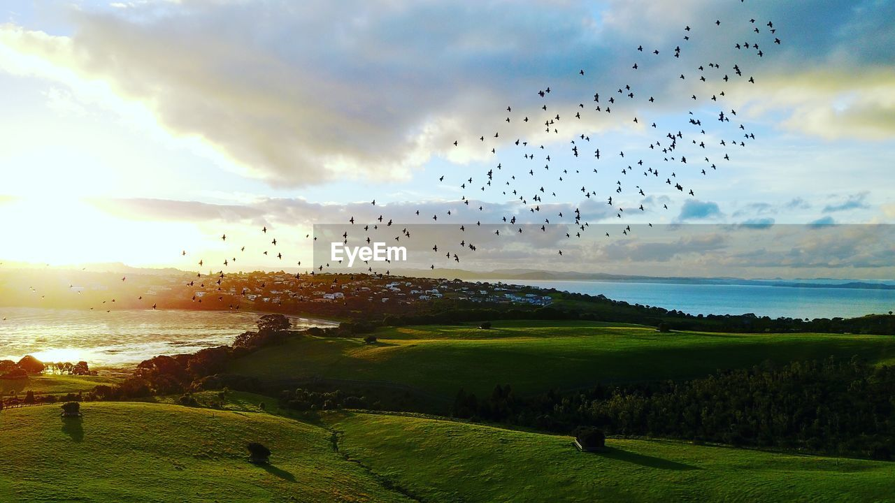 sky, cloud - sky, beauty in nature, scenics - nature, bird, water, animal, animal themes, group of animals, vertebrate, flying, large group of animals, sunset, nature, animals in the wild, tranquil scene, animal wildlife, sea, land, horizon over water, no people, flock of birds