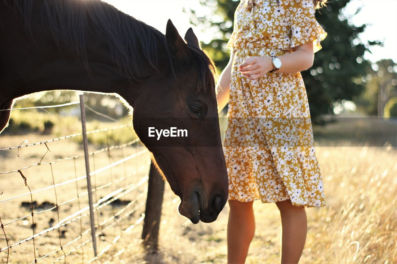 Midsection of woman standing by horse