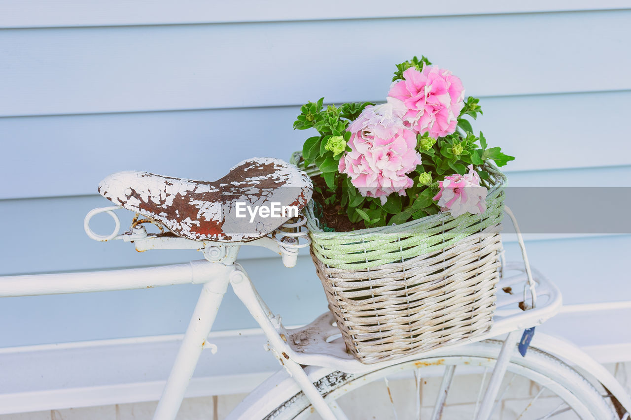 CLOSE-UP OF PINK FLOWERING PLANT IN BASKET ON TABLE AGAINST WALL