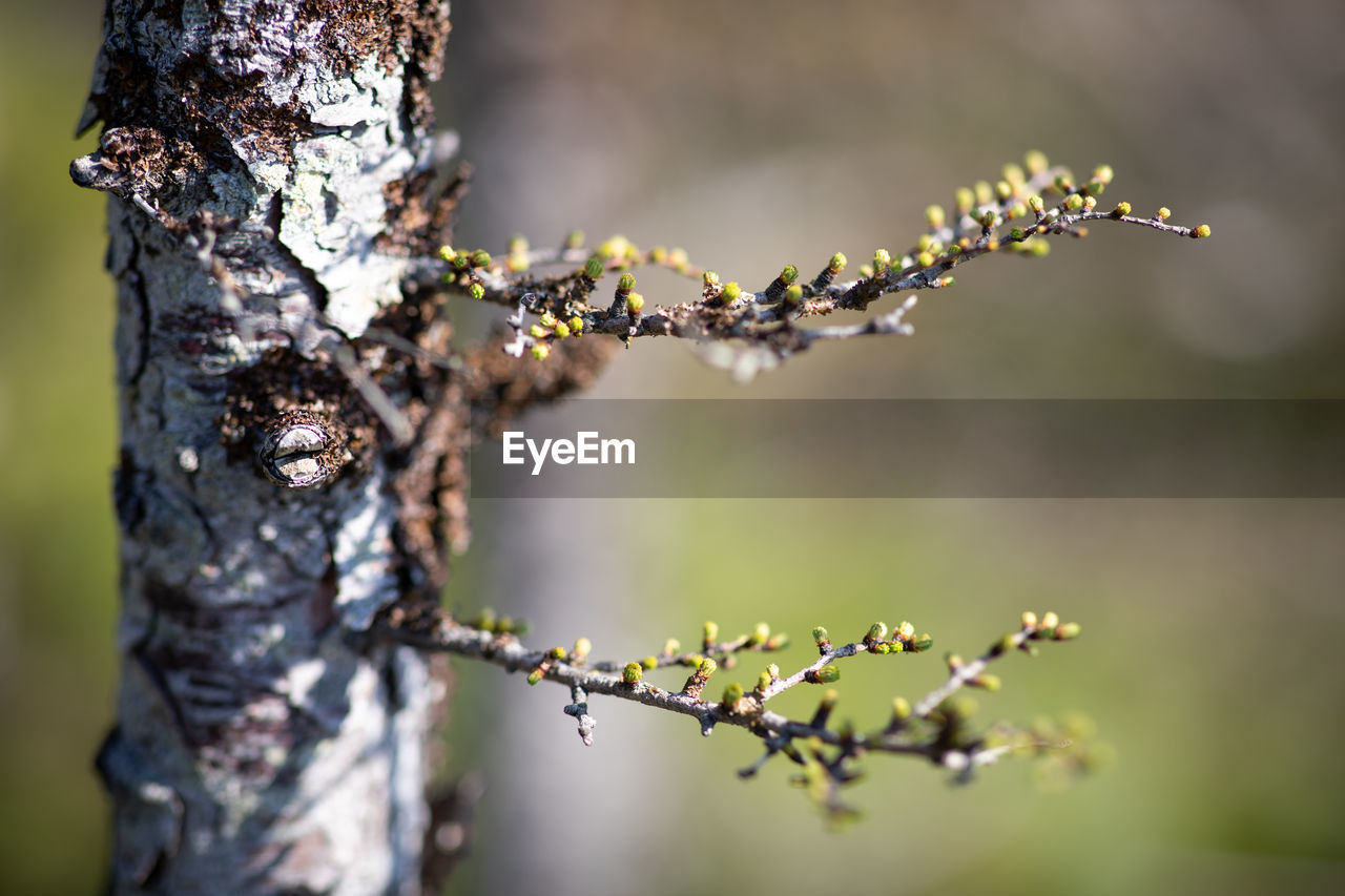 plant, tree, close-up, focus on foreground, growth, trunk, tree trunk, no people, nature, day, beauty in nature, selective focus, outdoors, tranquility, lichen, sunlight, branch, plant part, leaf, textured, dead plant, bark