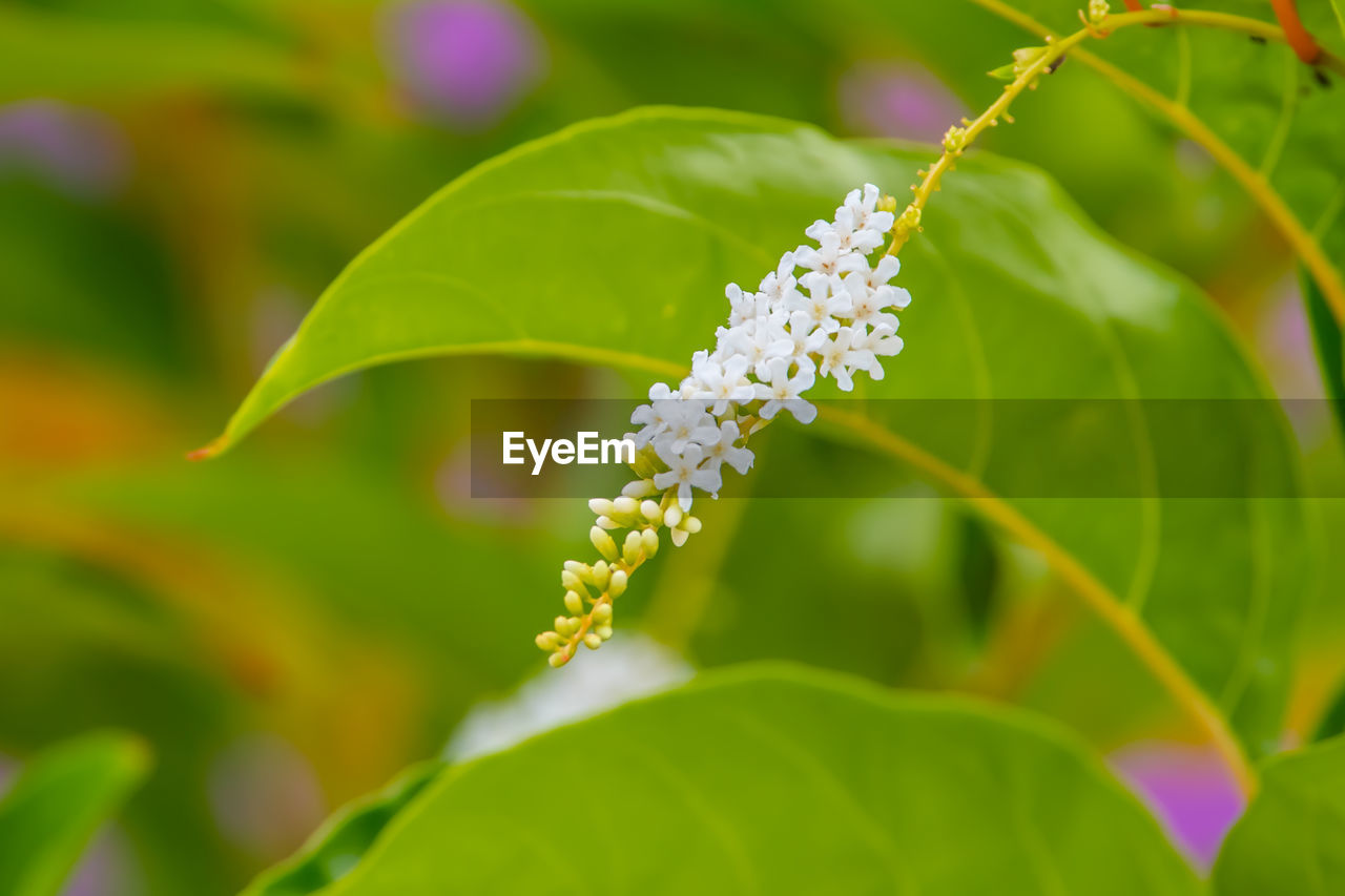 growth, plant, beauty in nature, flower, flowering plant, close-up, leaf, plant part, vulnerability, fragility, green color, freshness, selective focus, nature, day, no people, petal, flower head, focus on foreground, outdoors