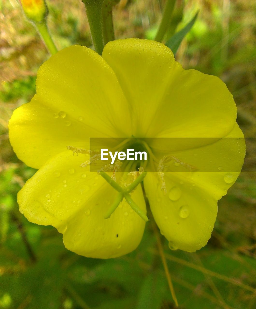 flower, yellow, growth, nature, beauty in nature, freshness, petal, fragility, plant, close-up, outdoors, green color, flower head, no people, day, blooming