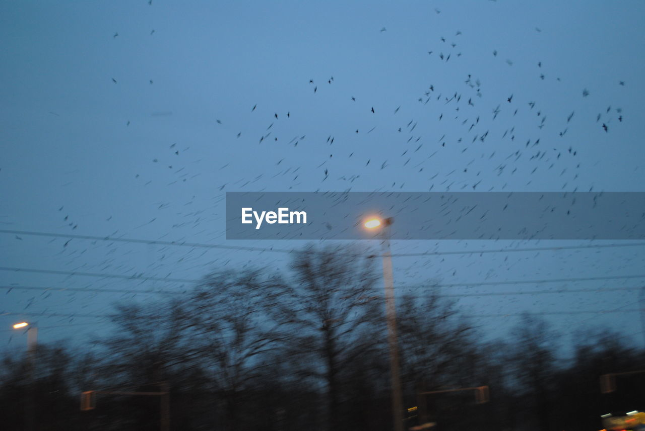 Flock of birds over illuminated street light and bare trees during winter
