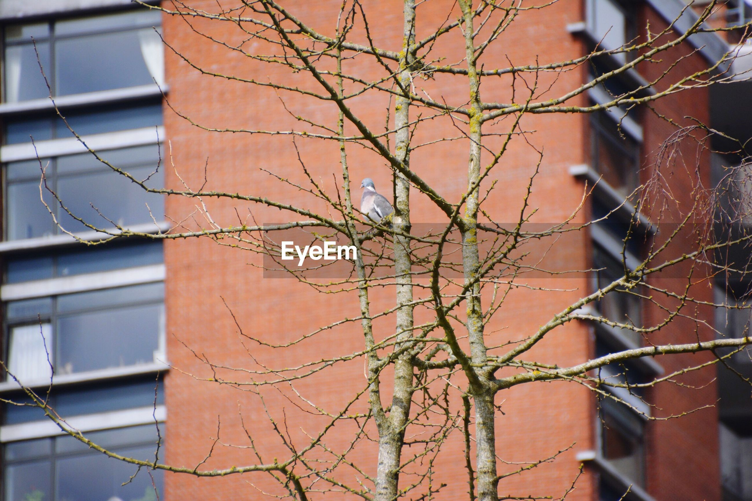 building exterior, built structure, architecture, no people, day, tree, outdoors, branch, sky, bare tree, close-up, beauty in nature, nature