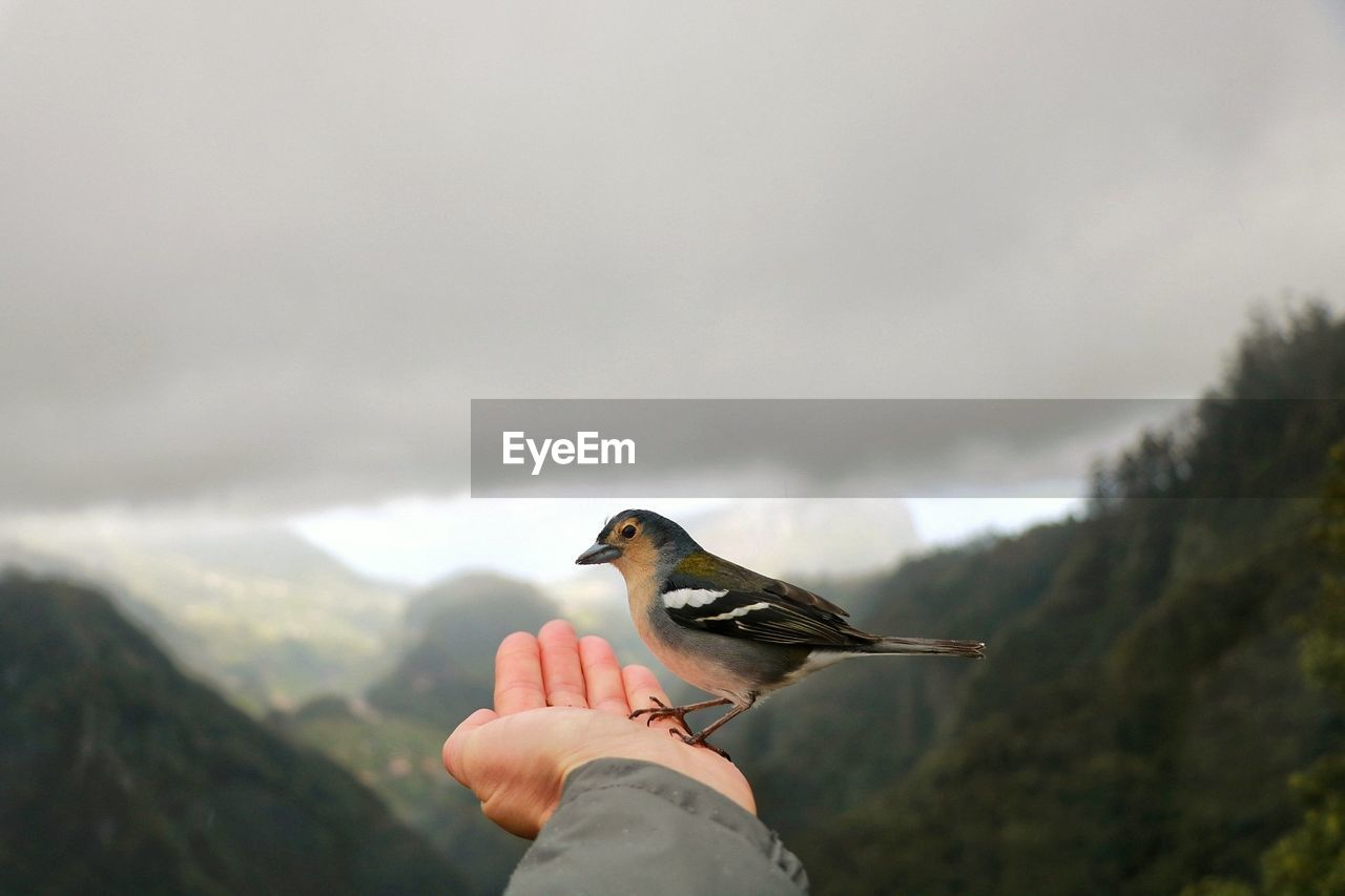 Close-Up Of Bird Perching On Cropped Hand Against Cloudy Sky