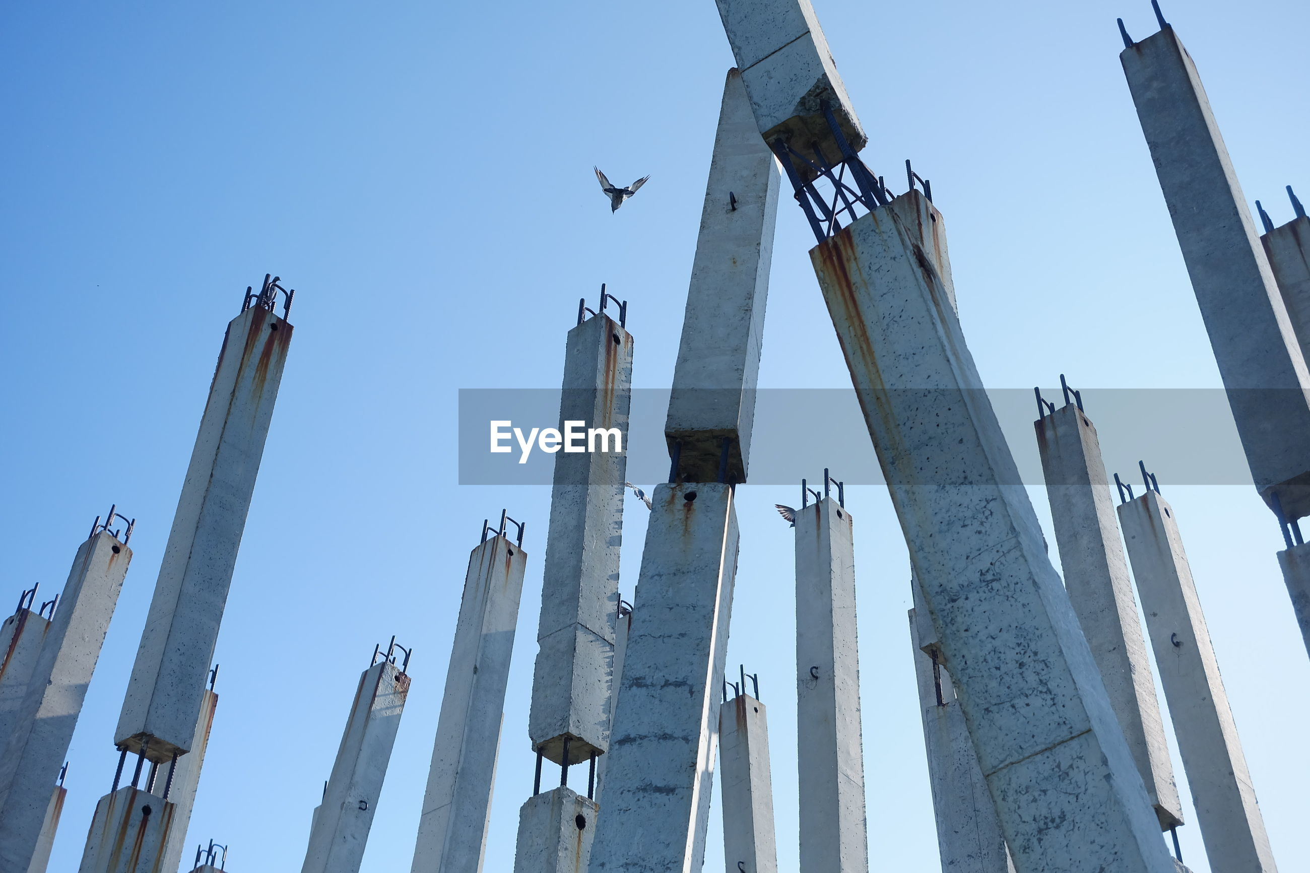 LOW ANGLE VIEW OF BIRDS FLYING OVER BUILDINGS AGAINST CLEAR SKY