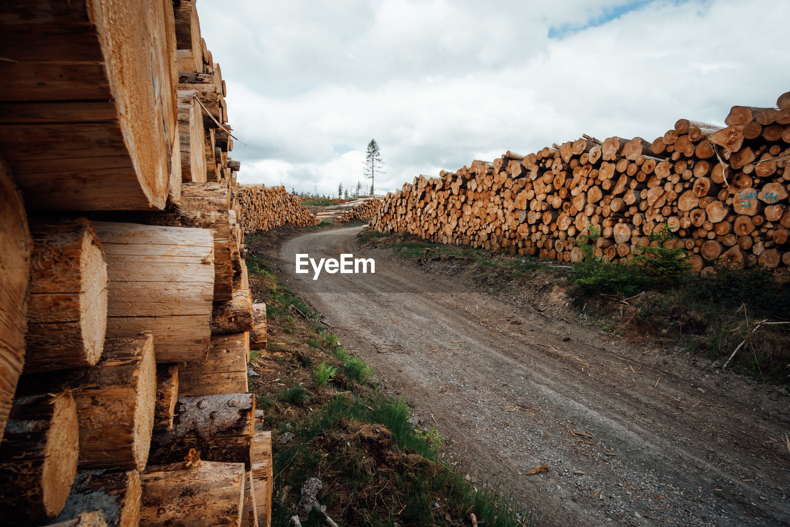 VIEW OF LOGS ON ROAD