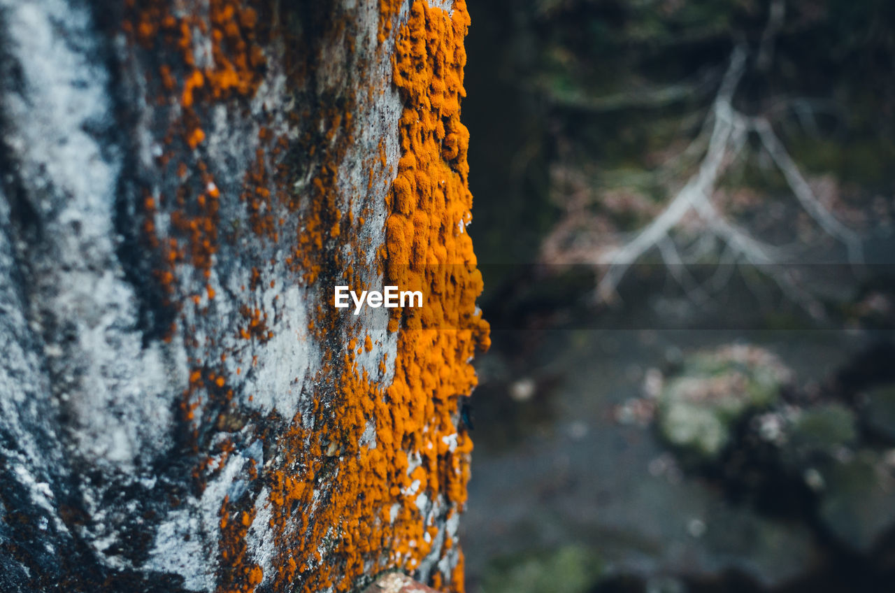 tree trunk, trunk, close-up, focus on foreground, tree, plant, no people, nature, selective focus, outdoors, day, orange color, beauty in nature, land, textured, growth, wood - material, lichen, yellow, pattern