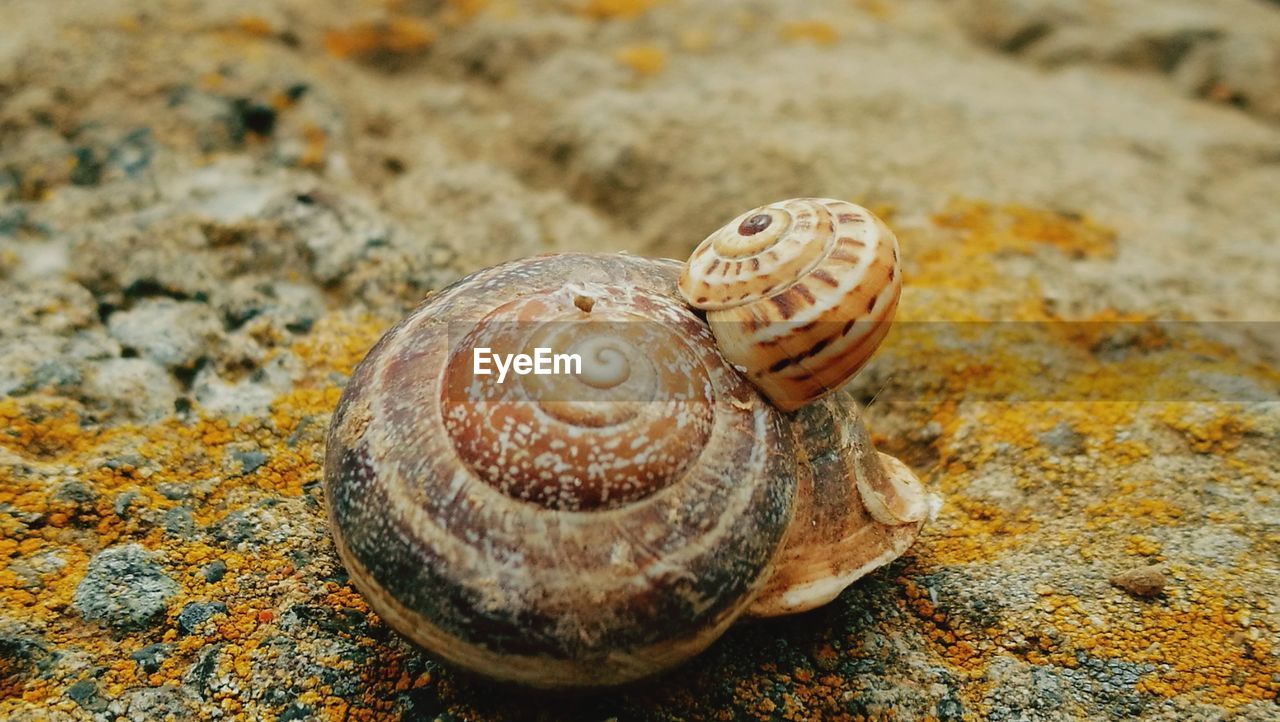 animal wildlife, animal, animal themes, shell, animals in the wild, animal shell, one animal, close-up, no people, spiral, textured, solid, nature, natural pattern, focus on foreground, pattern, land, invertebrate, rock, day, outdoors, marine