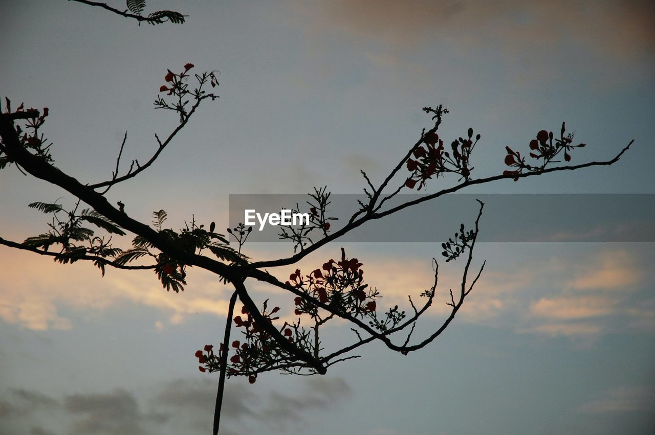 nature, sky, tree, beauty in nature, low angle view, branch, growth, sunset, no people, outdoors, flower, tranquility, day