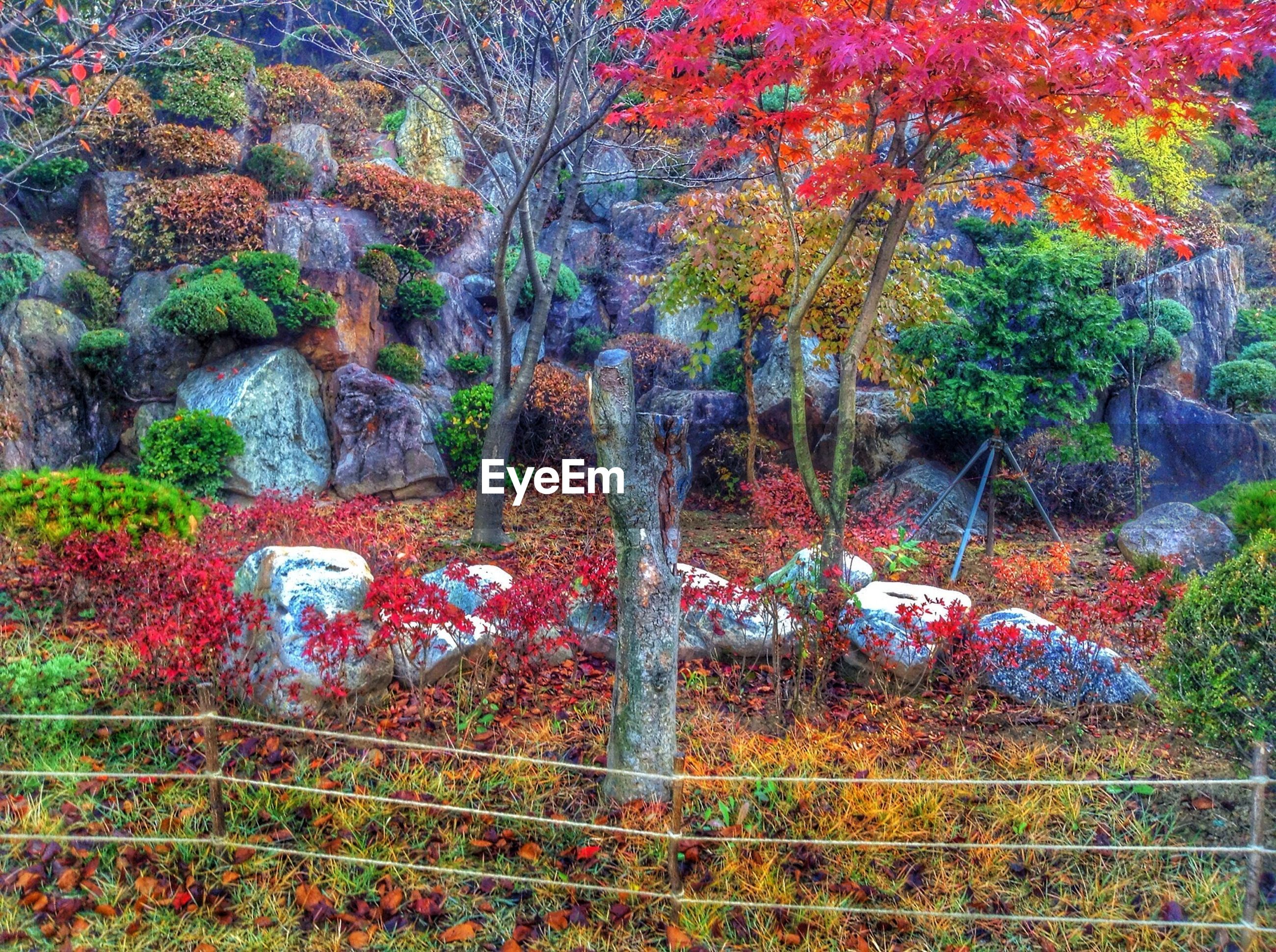 tree, growth, tranquility, nature, beauty in nature, plant, autumn, forest, tranquil scene, park - man made space, scenics, tree trunk, change, branch, day, outdoors, no people, growing, rock - object, fence