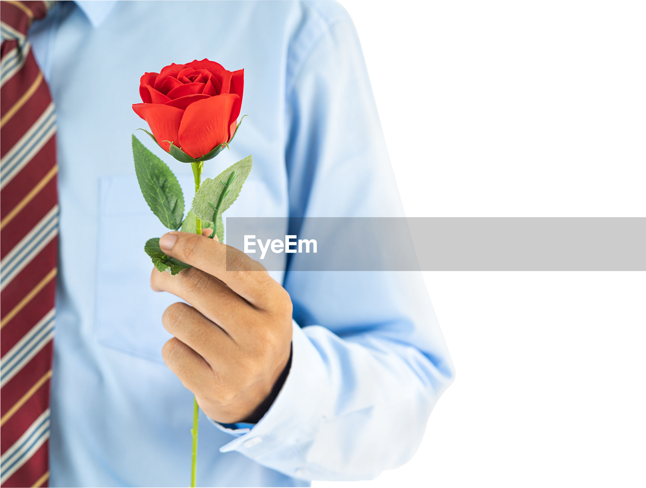Midsection of man holding red rose against white roses