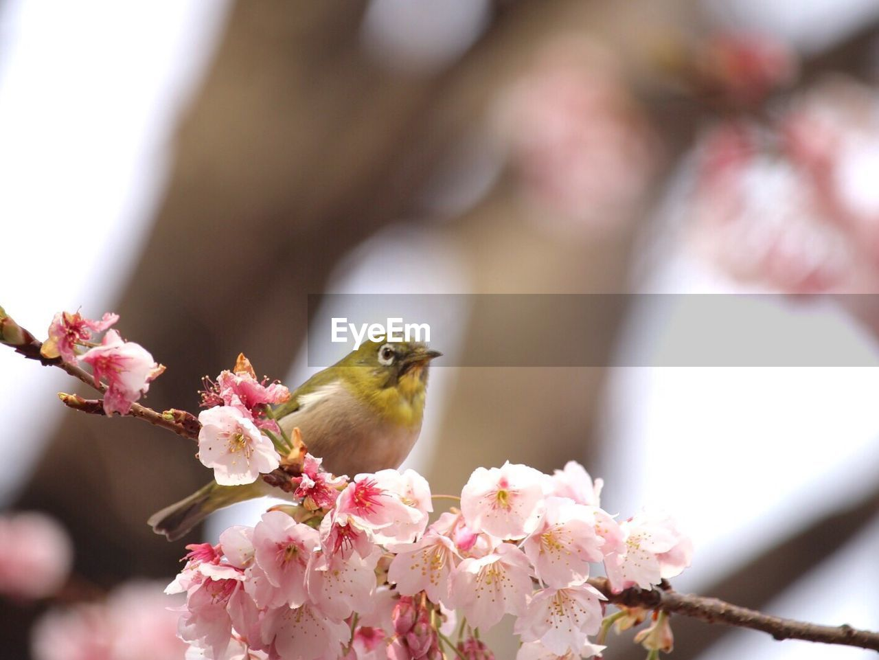 one animal, flower, animals in the wild, animal themes, day, bird, nature, close-up, fragility, outdoors, one person, growth, perching, beauty in nature, flower head, freshness