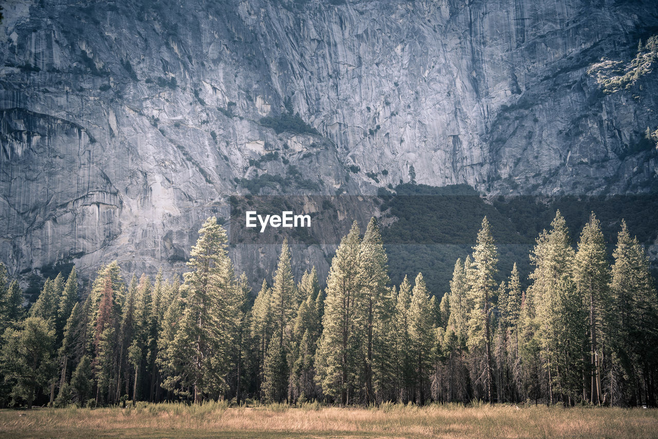 Trees growing against mountain at yosemite national park