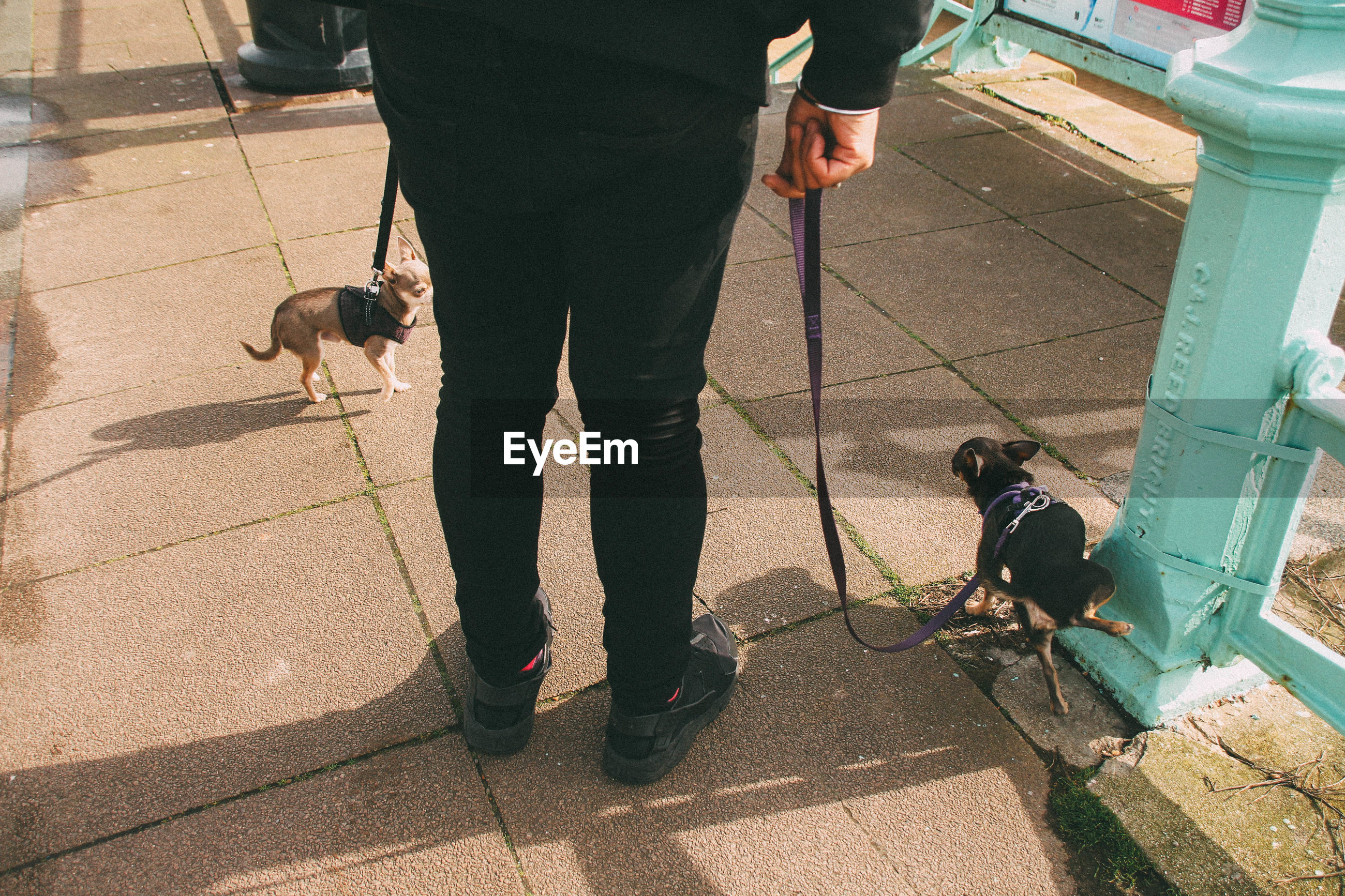 Low section of man with dogs standing on footpath