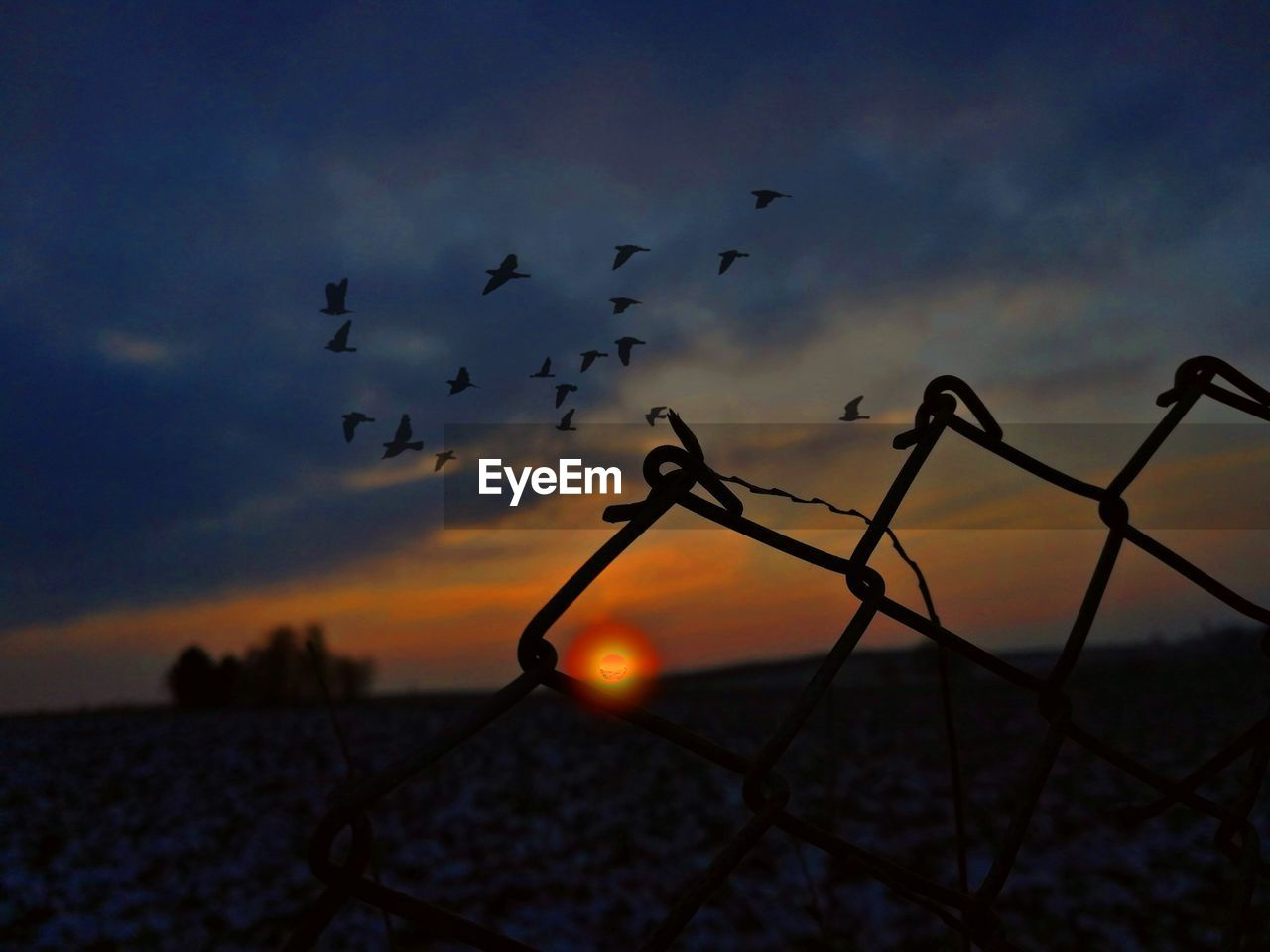 sunset, sky, silhouette, cloud - sky, bird, beauty in nature, nature, orange color, large group of animals, vertebrate, flying, animals in the wild, animal themes, scenics - nature, group of animals, animal, animal wildlife, metal, fence, tranquil scene, no people, flock of birds, outdoors