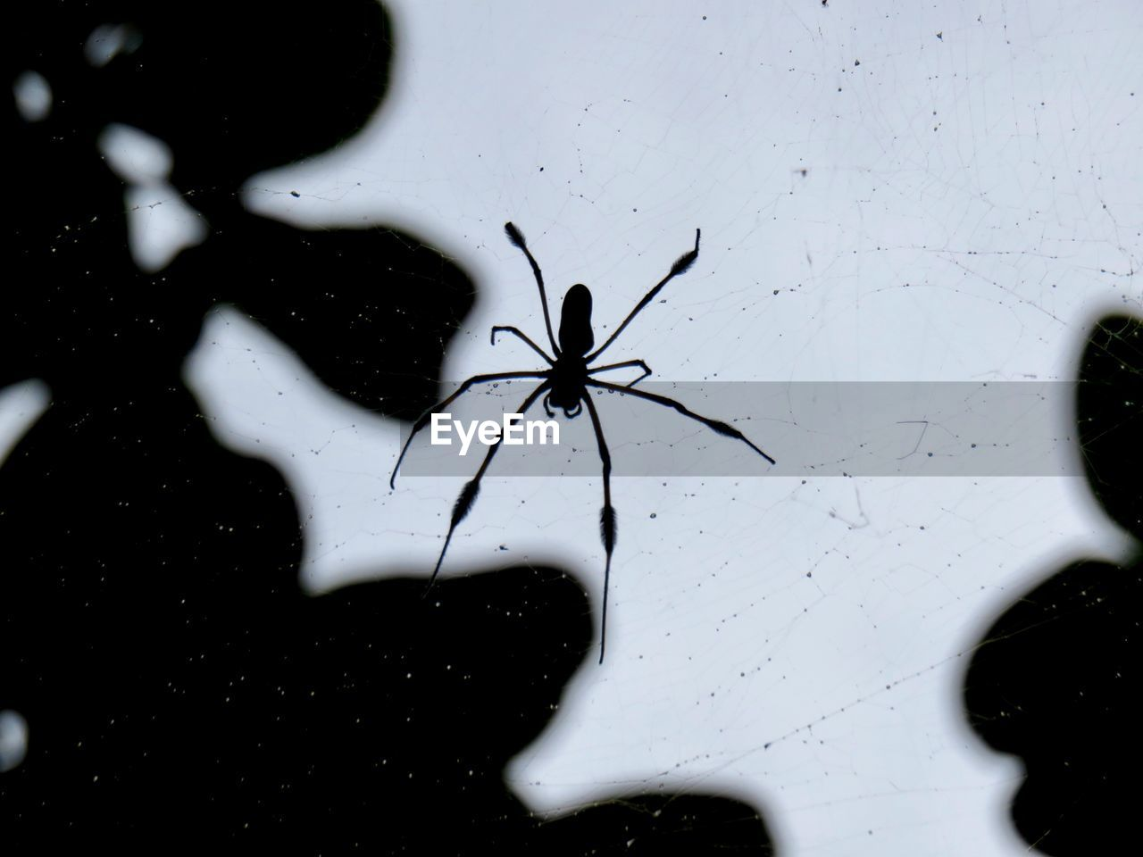 invertebrate, arachnid, animal themes, arthropod, no people, animal, spider, close-up, animals in the wild, one animal, animal wildlife, insect, indoors, white color, glass - material, window, full frame, water, nature, animal leg