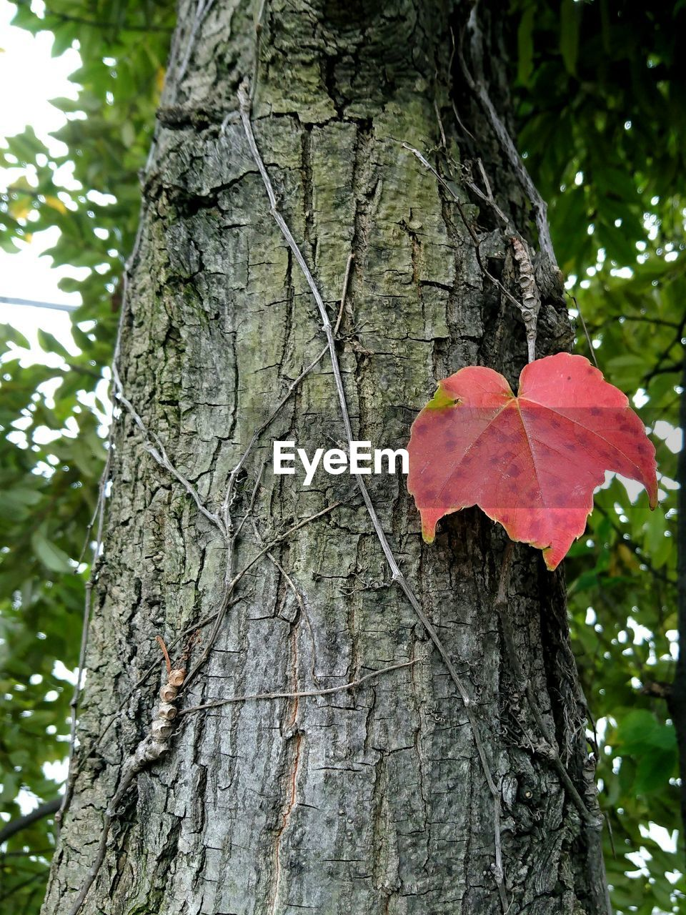 Eye4photography  EyeEm Nature Lover Nature Beauty In Nature Leaf Autumn Change Plant Leaves Light And Shadow Getting Inspired Taking Photos Growth Tree No People Tranquility Relaxing Red Textured  Yokohama XPERIA