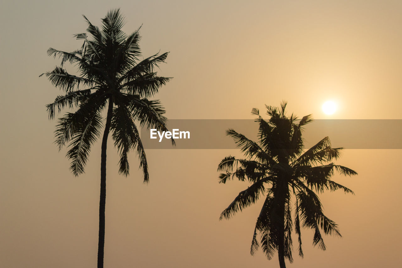 sky, palm tree, tree, plant, tropical climate, sunset, silhouette, beauty in nature, tranquility, orange color, growth, scenics - nature, nature, tranquil scene, no people, sun, outdoors, clear sky, trunk, tree trunk, coconut palm tree, tropical tree, palm leaf