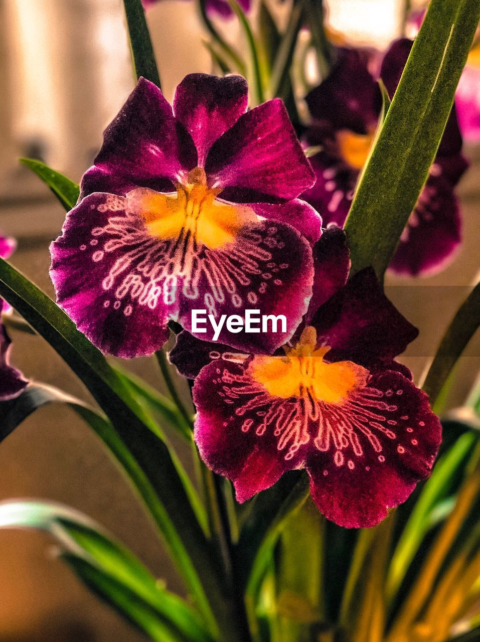 flower, petal, growth, fragility, freshness, beauty in nature, flower head, nature, plant, purple, close-up, no people, blooming, outdoors, day, day lily