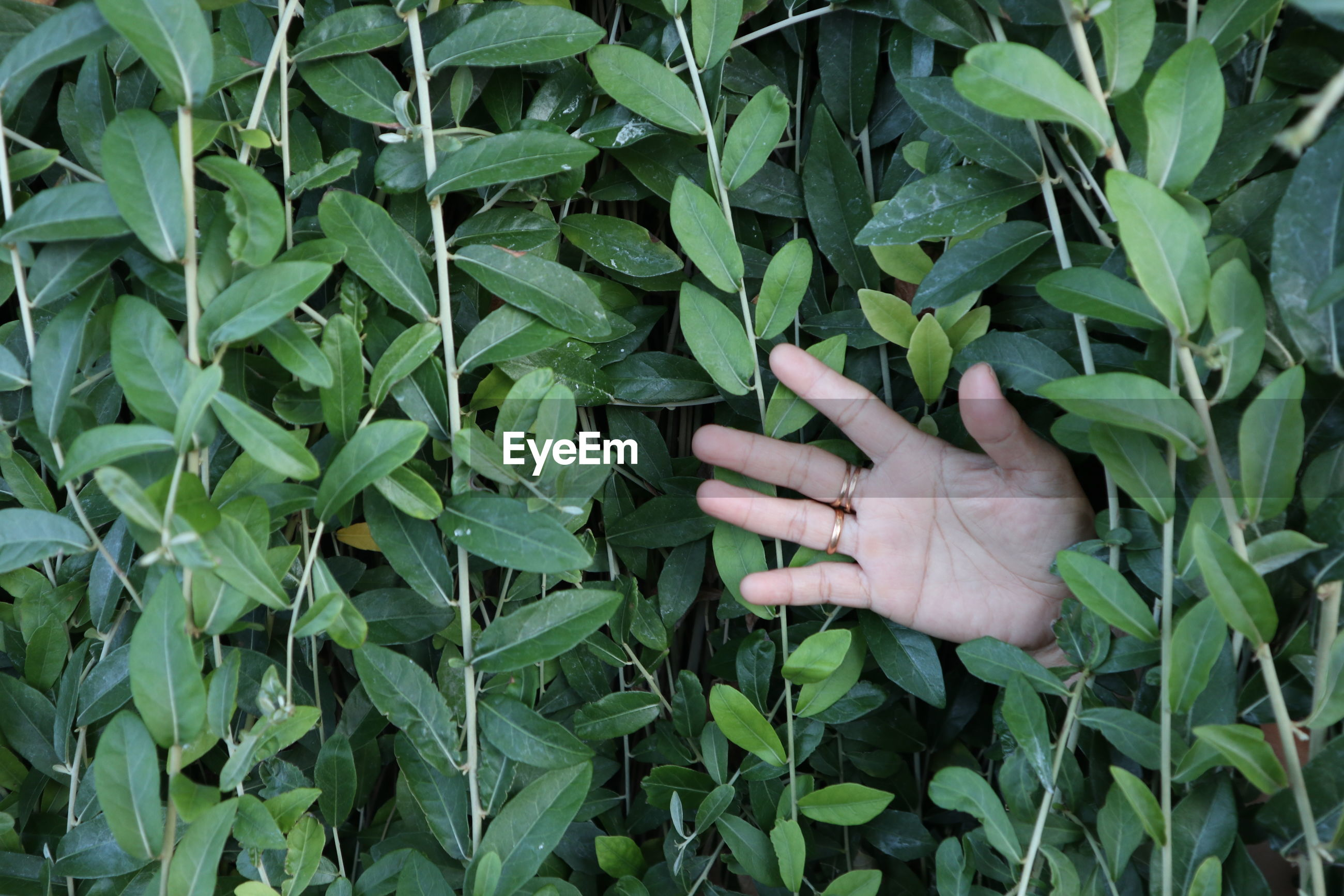 Close-up of human hand amidst green plants