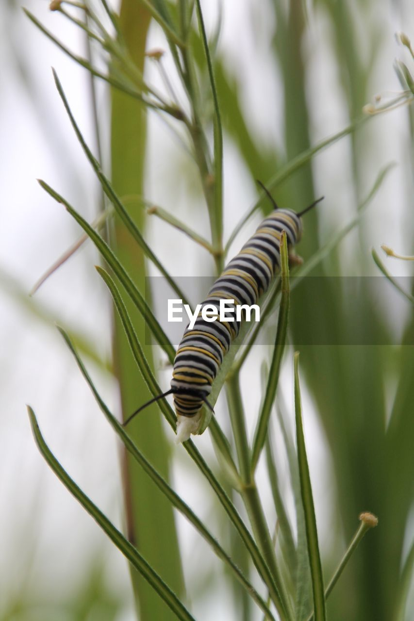 nature, striped, one animal, no people, green color, close-up, day, growth, animal themes, outdoors, beauty in nature