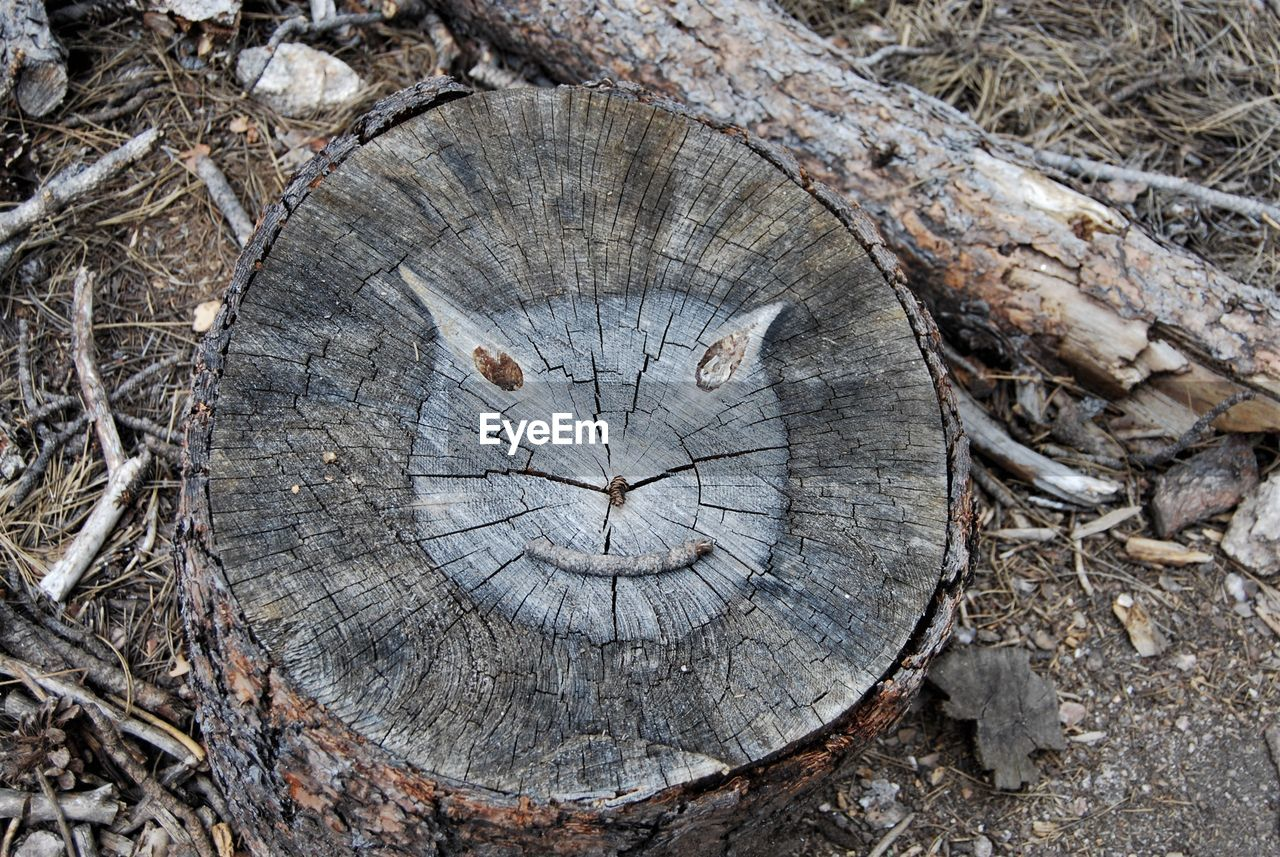 tree ring, wood - material, timber, log, close-up, tree stump, deforestation, no people, outdoors, day, industry, tree, nature