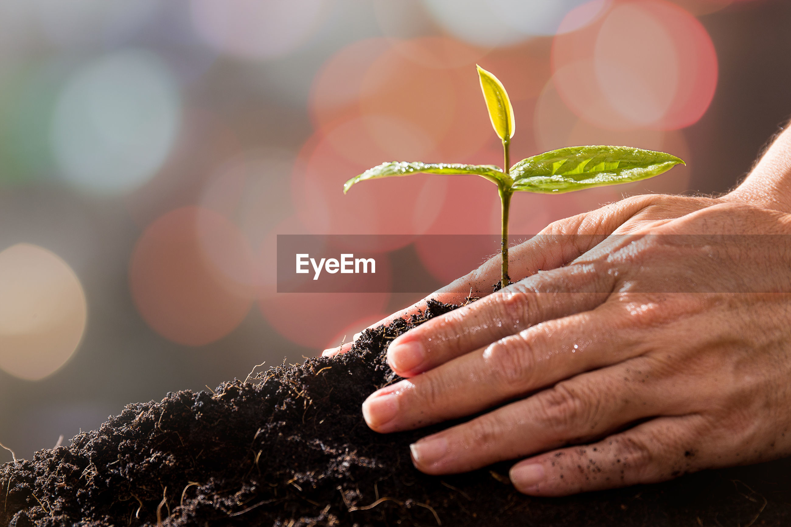 Cropped image of hands gardening at back yard