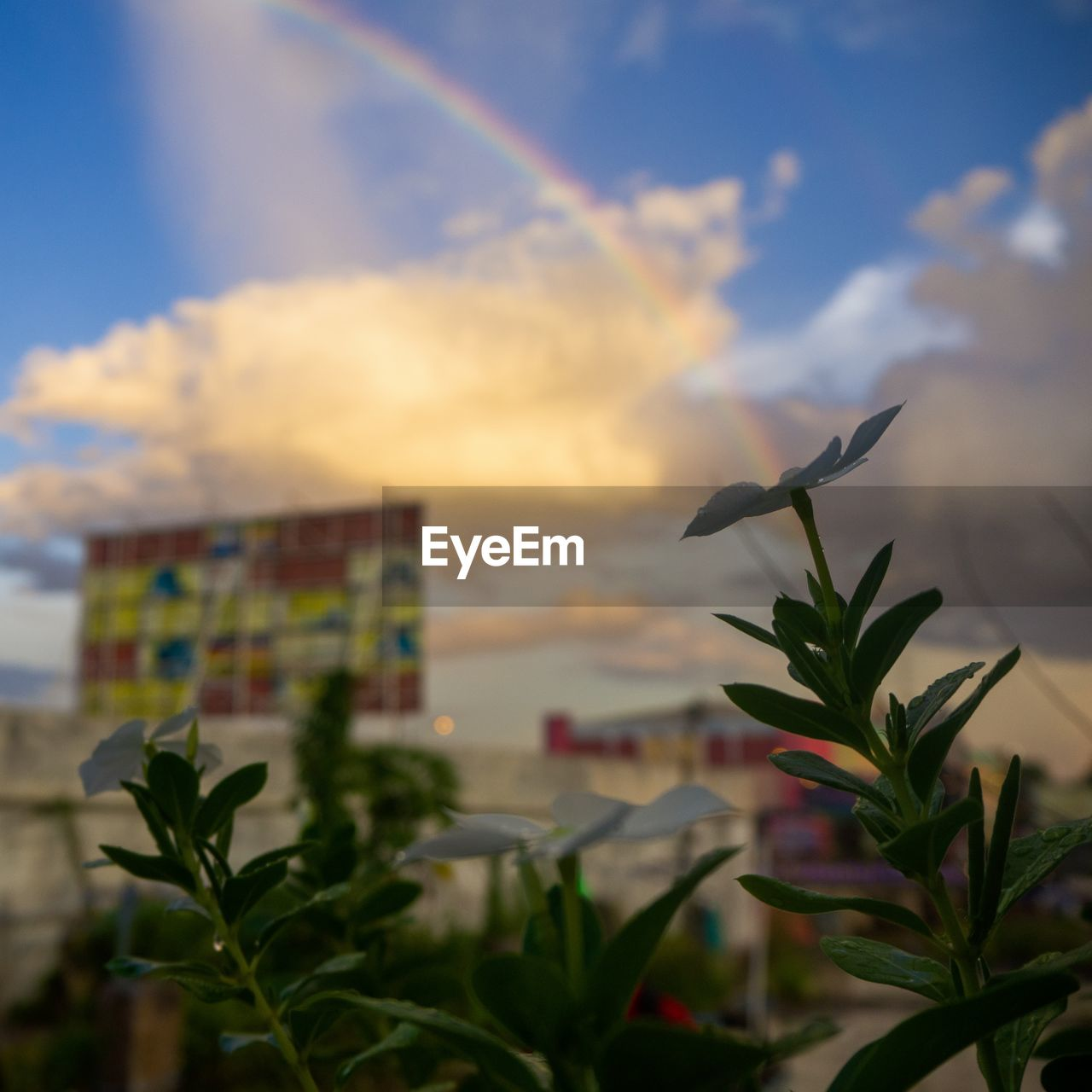 plant part, leaf, plant, cloud - sky, sky, growth, beauty in nature, nature, no people, focus on foreground, close-up, multi colored, outdoors, architecture, built structure, day, selective focus, scenics - nature, flowering plant, flower
