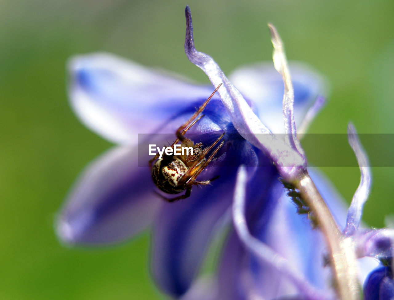 flower, flowering plant, plant, animal themes, invertebrate, animal wildlife, animals in the wild, animal, beauty in nature, insect, one animal, petal, fragility, purple, close-up, vulnerability, growth, flower head, nature, freshness, no people, pollination, outdoors, pollen