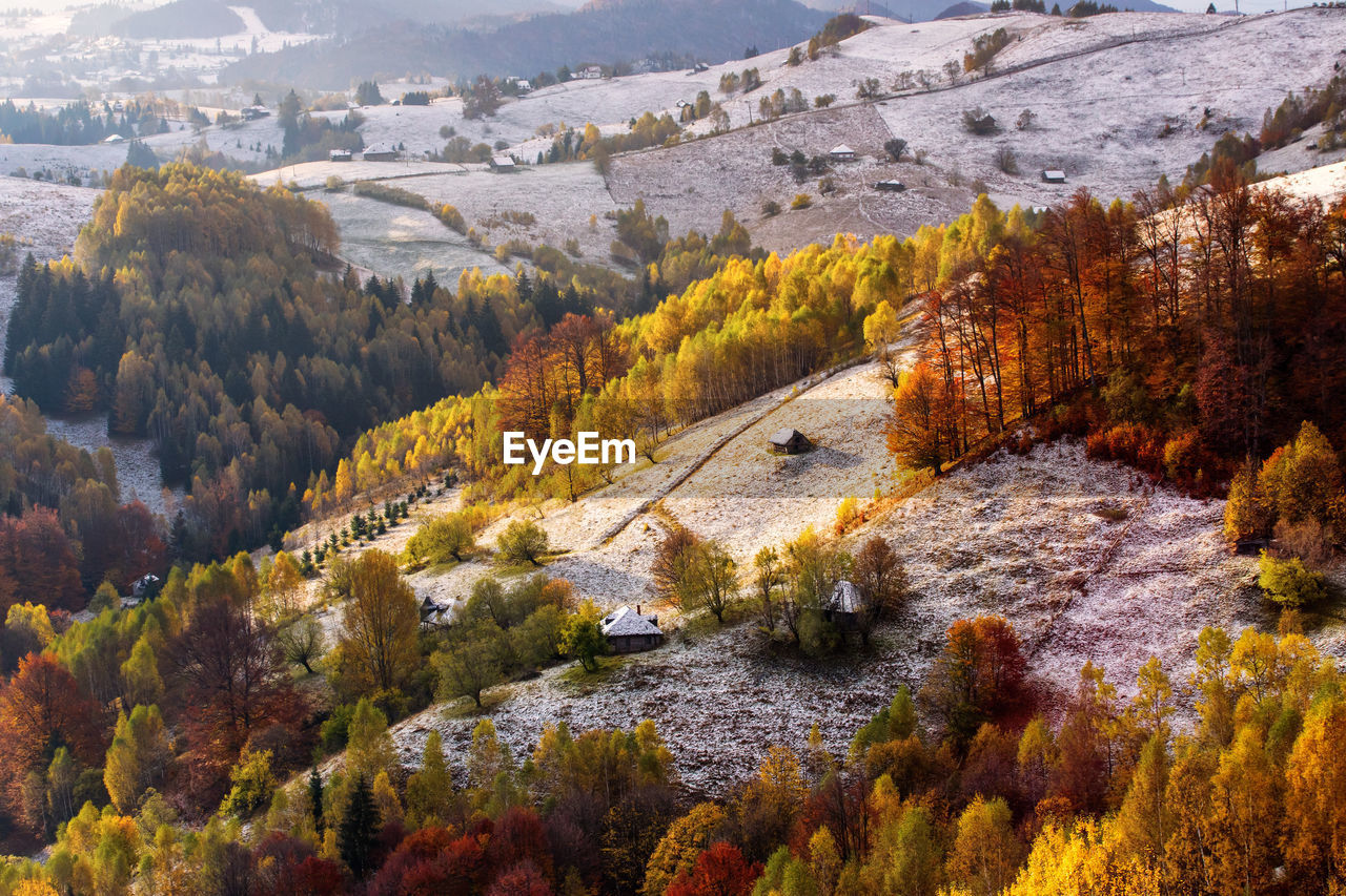 HIGH ANGLE VIEW OF PINE TREES ON MOUNTAIN DURING AUTUMN