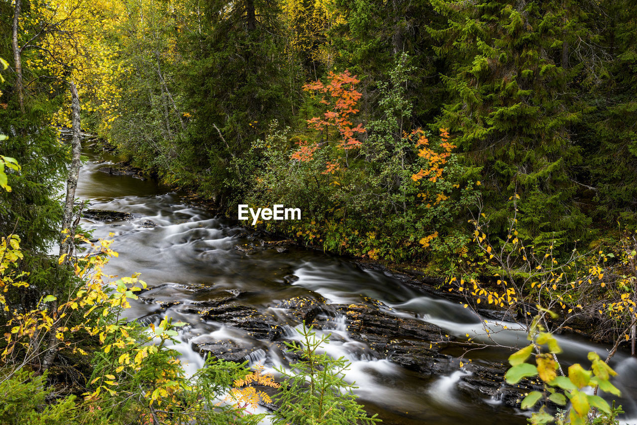 plant, forest, water, tree, beauty in nature, land, nature, flowing water, no people, motion, growth, river, scenics - nature, day, stream - flowing water, environment, blurred motion, autumn, flowing, outdoors, change