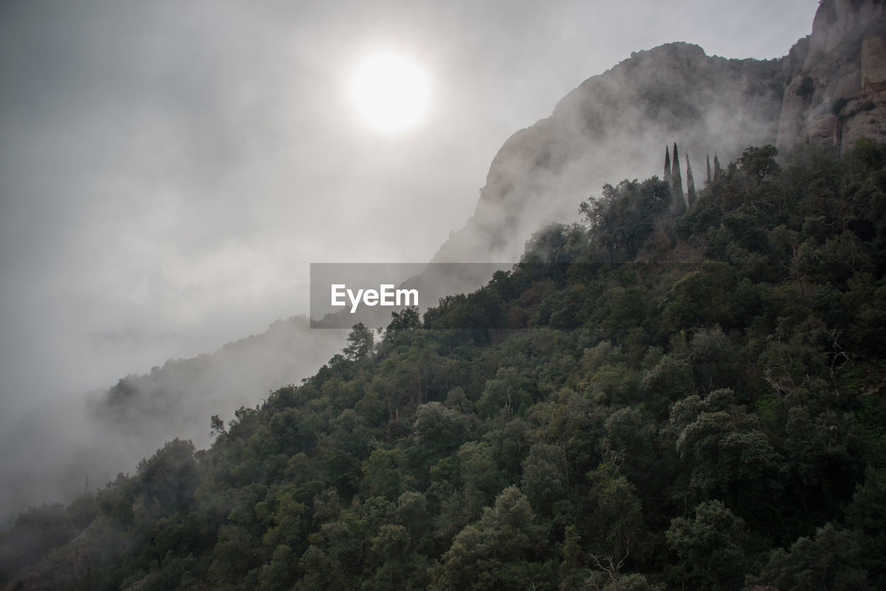 sky, tree, mountain, scenics - nature, plant, beauty in nature, nature, no people, tranquil scene, tranquility, cloud - sky, day, non-urban scene, outdoors, forest, growth, land, sun, environment, pollution