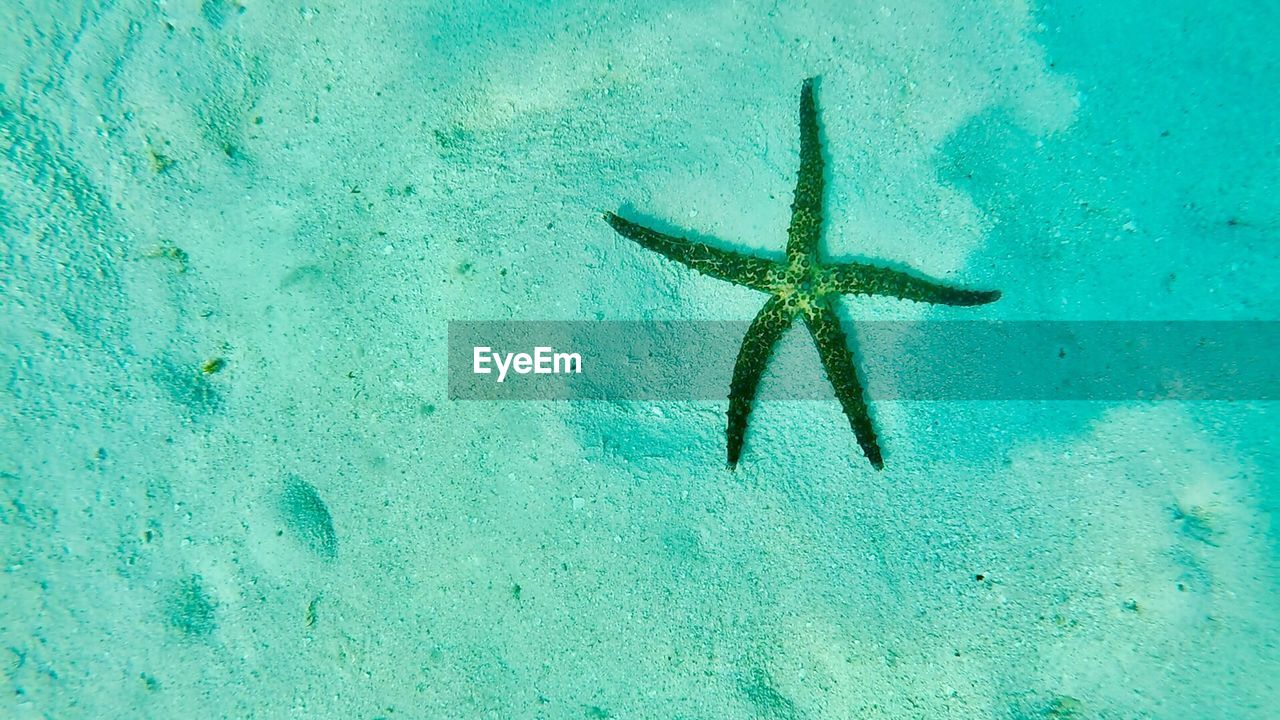 starfish, sea life, sea, one animal, animals in the wild, underwater, day, nature, animal themes, no people, undersea, water, beach, full length, outdoors, beauty in nature, close-up