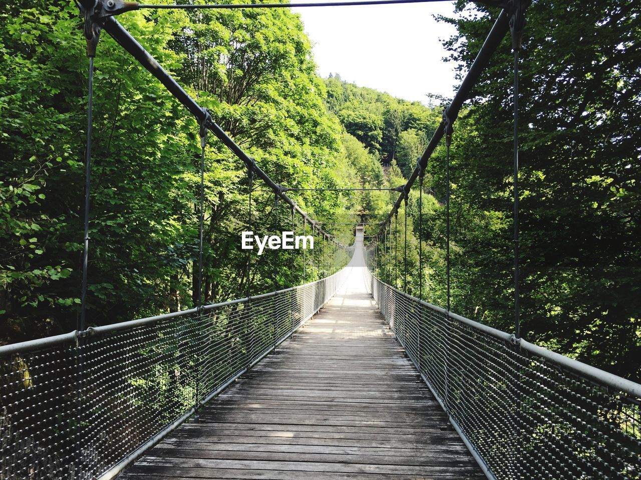 tree, plant, the way forward, direction, forest, connection, nature, bridge, footbridge, green color, rope bridge, tranquility, foliage, diminishing perspective, day, lush foliage, land, bridge - man made structure, no people, growth, outdoors, long