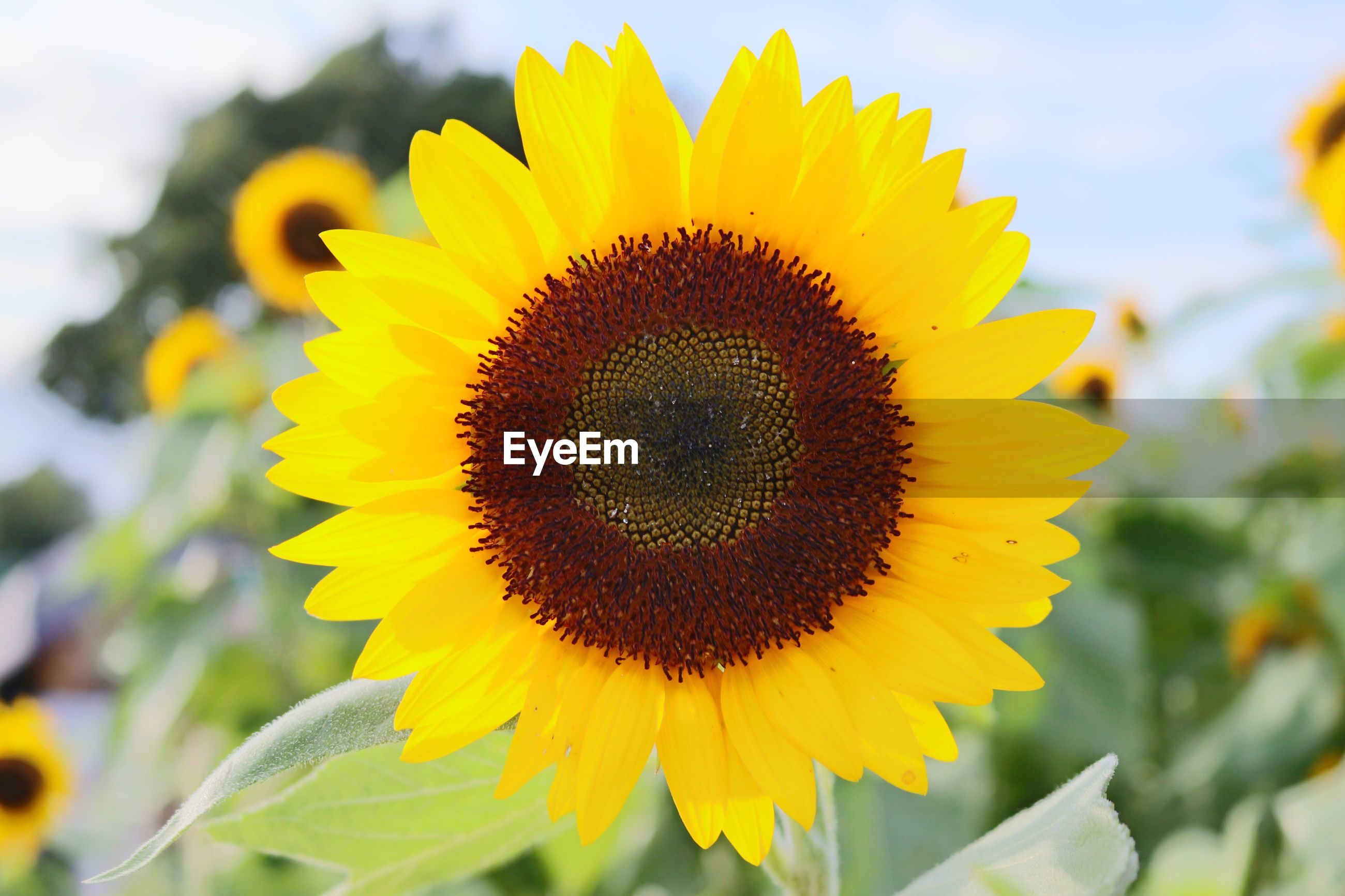 yellow, flower head, freshness, flower, fragility, petal, close-up, sunflower, beauty in nature, growth, nature, focus on foreground, vibrant color, pollen, plant, selective focus, macro, springtime, in bloom, blossom, softness, single flower, day, bloom, botany, outdoors, extreme close up, exoticism, no people, soft focus