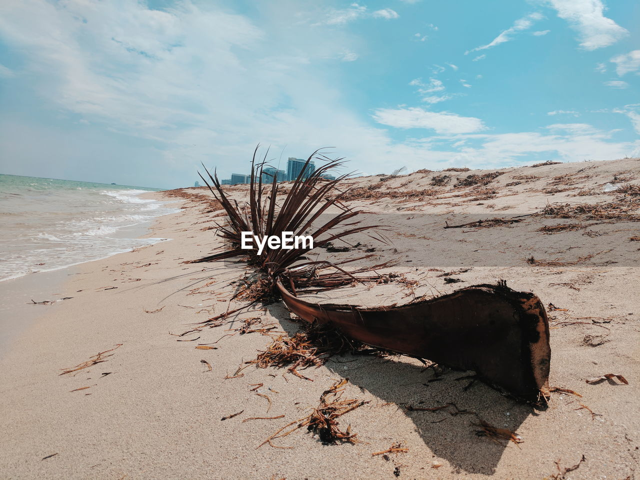 land, beach, sand, sky, nature, sea, water, tranquil scene, scenics - nature, tranquility, day, cloud - sky, no people, beauty in nature, sunlight, outdoors, wood, driftwood, horizon, horizon over water, dead plant, pollution