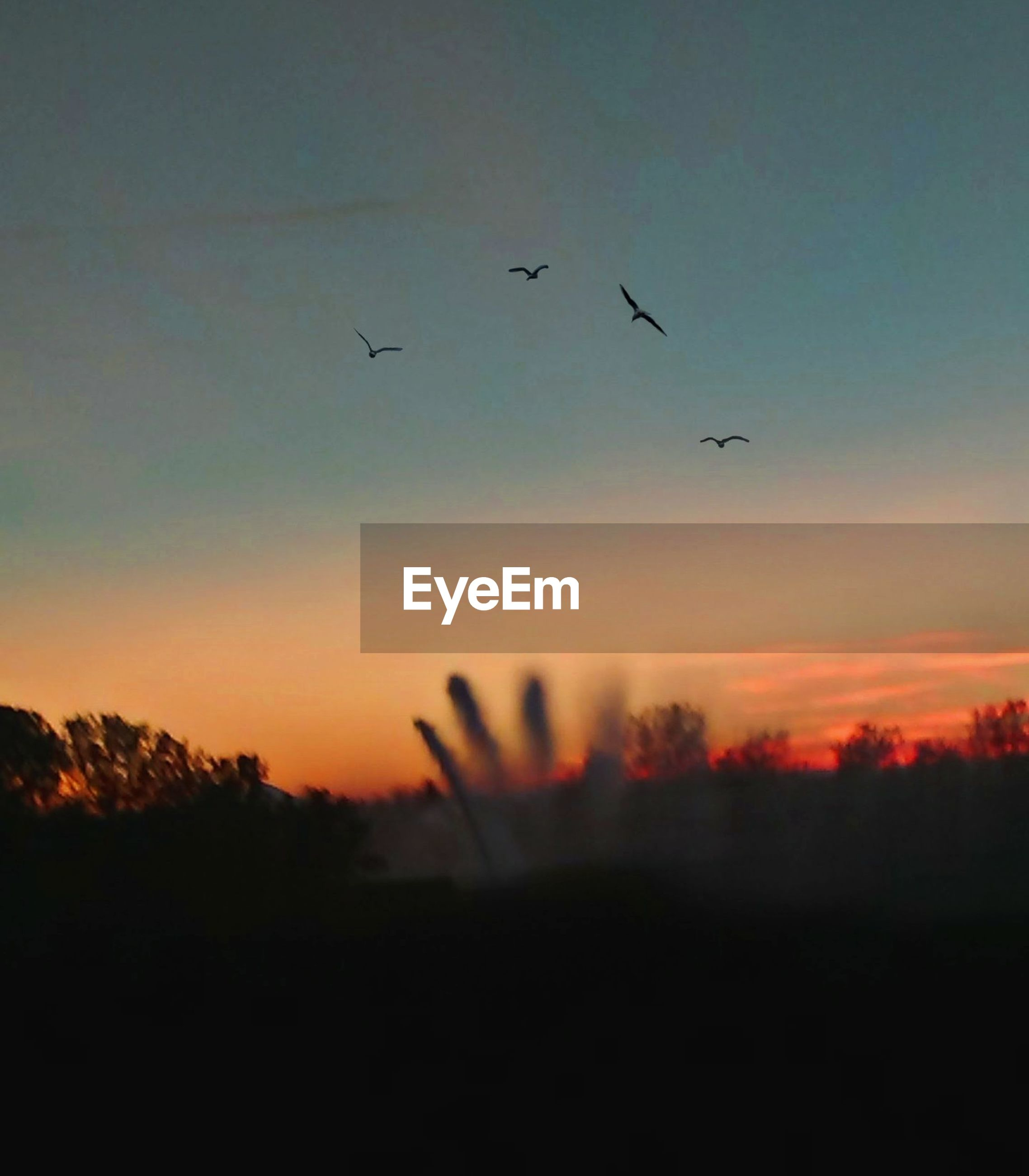 sunset, sky, silhouette, beauty in nature, vertebrate, animal themes, flying, bird, scenics - nature, animal, orange color, nature, tranquil scene, animals in the wild, tranquility, group of animals, animal wildlife, plant, no people, cloud - sky, outdoors