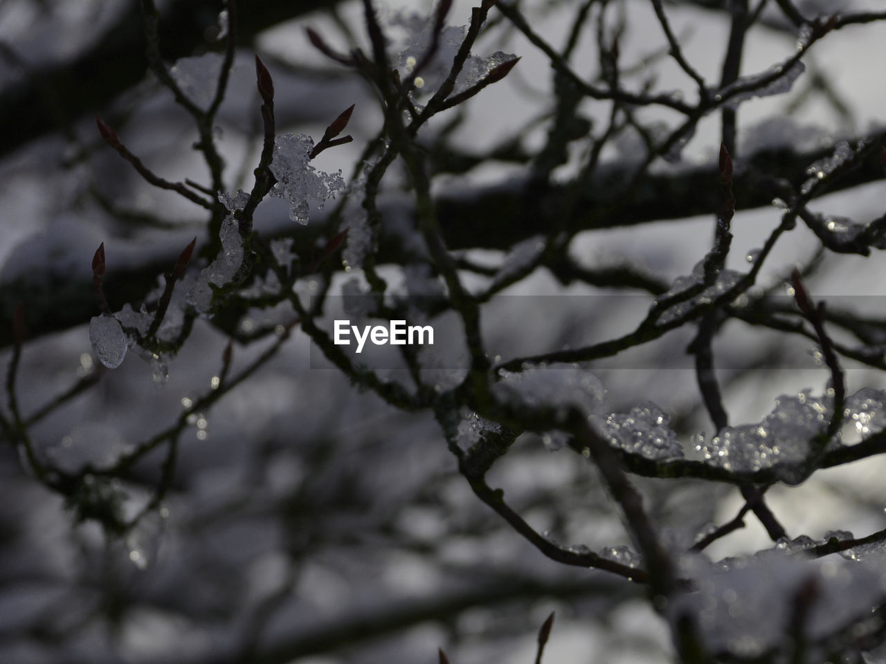plant, beauty in nature, focus on foreground, growth, nature, no people, close-up, winter, tree, day, branch, cold temperature, outdoors, tranquility, selective focus, drop, snow, wet, raindrop