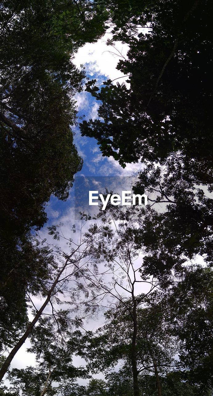 tree, nature, growth, low angle view, beauty in nature, branch, tranquility, day, outdoors, no people, sky, forest, scenics, water