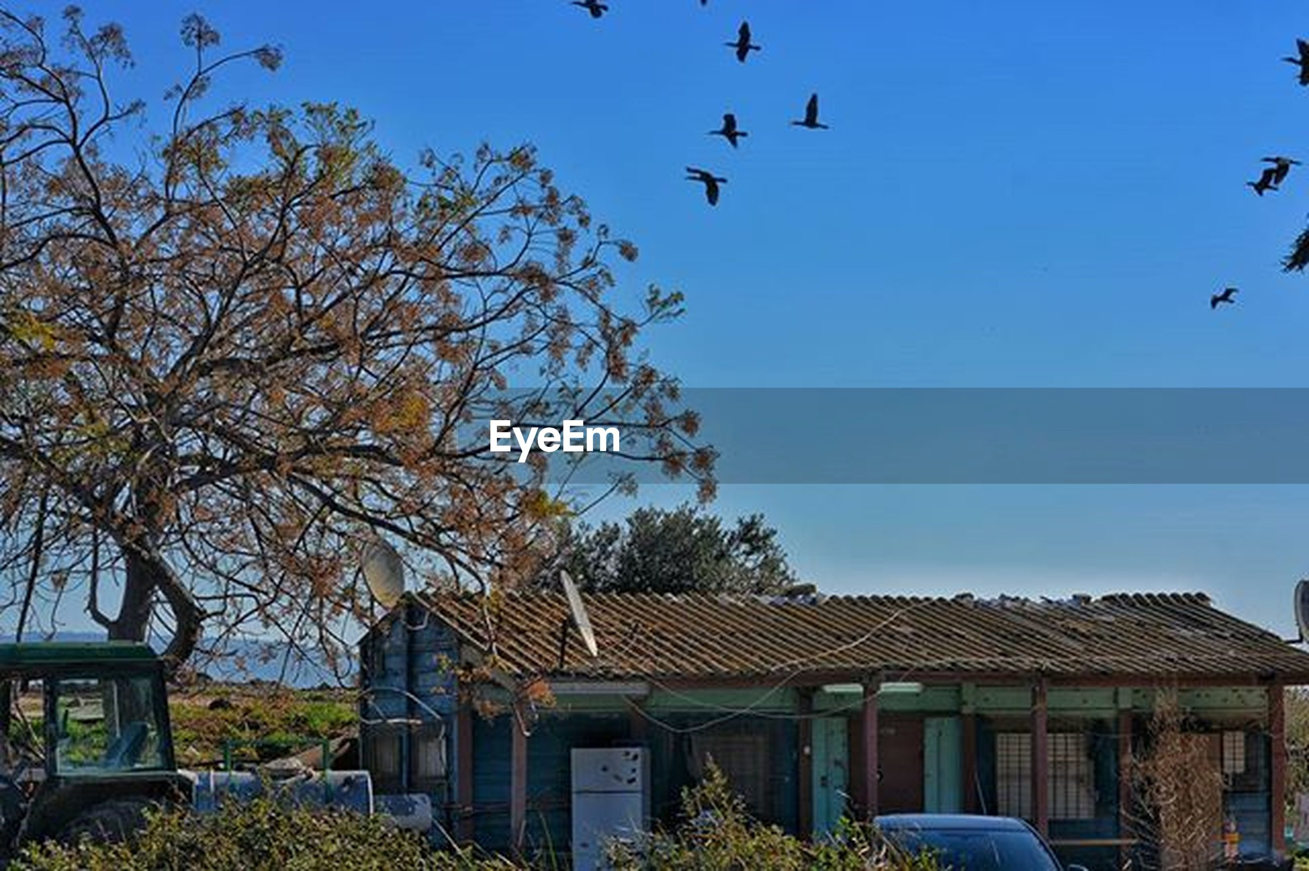 building exterior, clear sky, built structure, architecture, bird, tree, house, blue, animal themes, low angle view, roof, flying, copy space, animals in the wild, residential structure, wildlife, residential building, day, outdoors