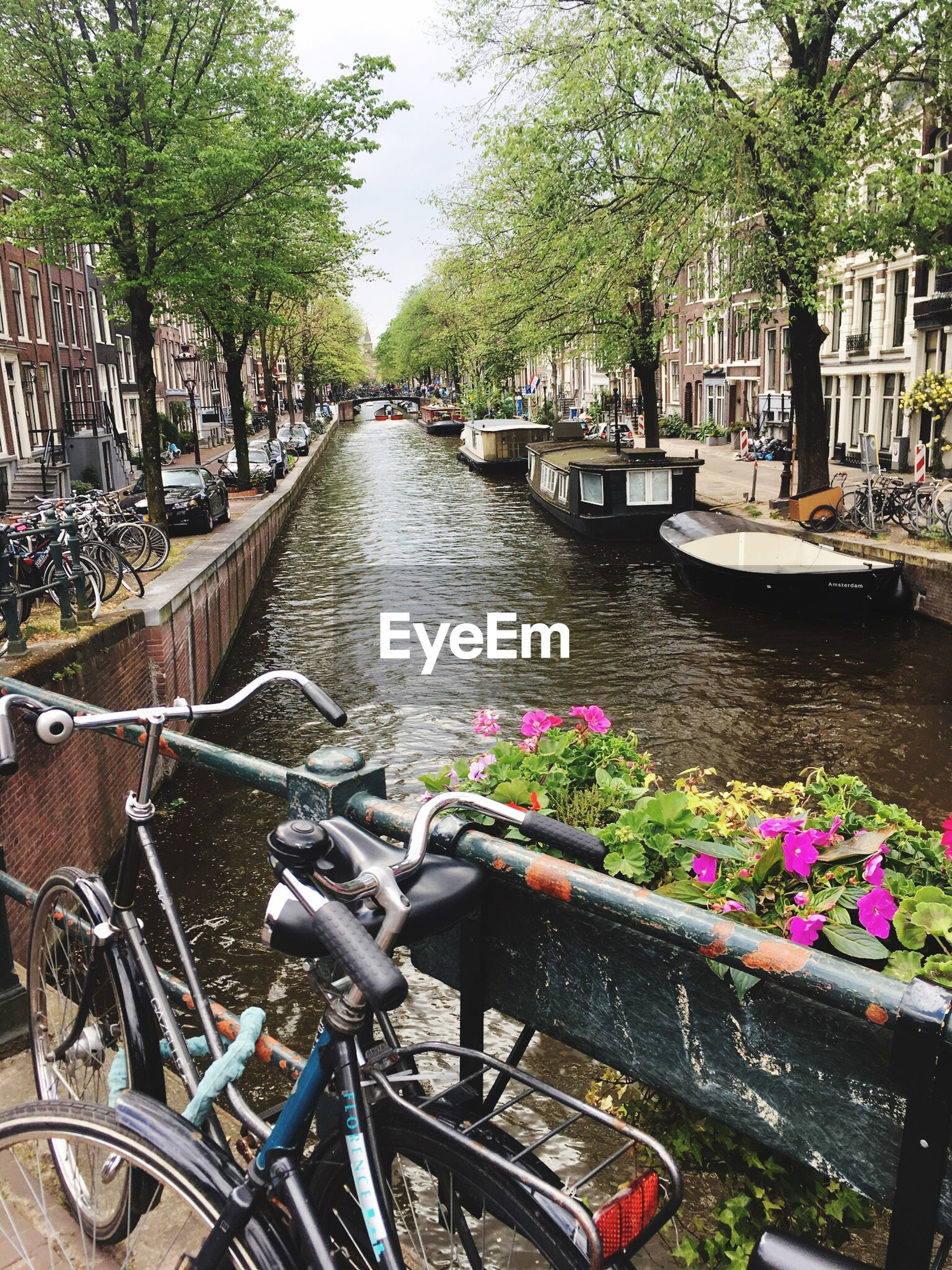 bicycle, transportation, mode of transport, tree, canal, water, land vehicle, architecture, outdoors, day, flower, city, built structure, building exterior, no people, nature, nautical vessel