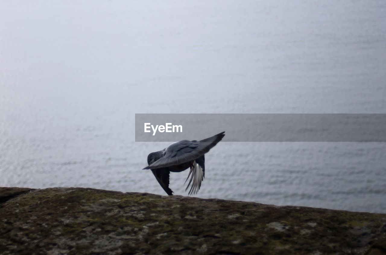 one animal, water, bird, sea, animal themes, animals in the wild, nature, animal wildlife, no people, day, outdoors, perching, beauty in nature, horizon over water