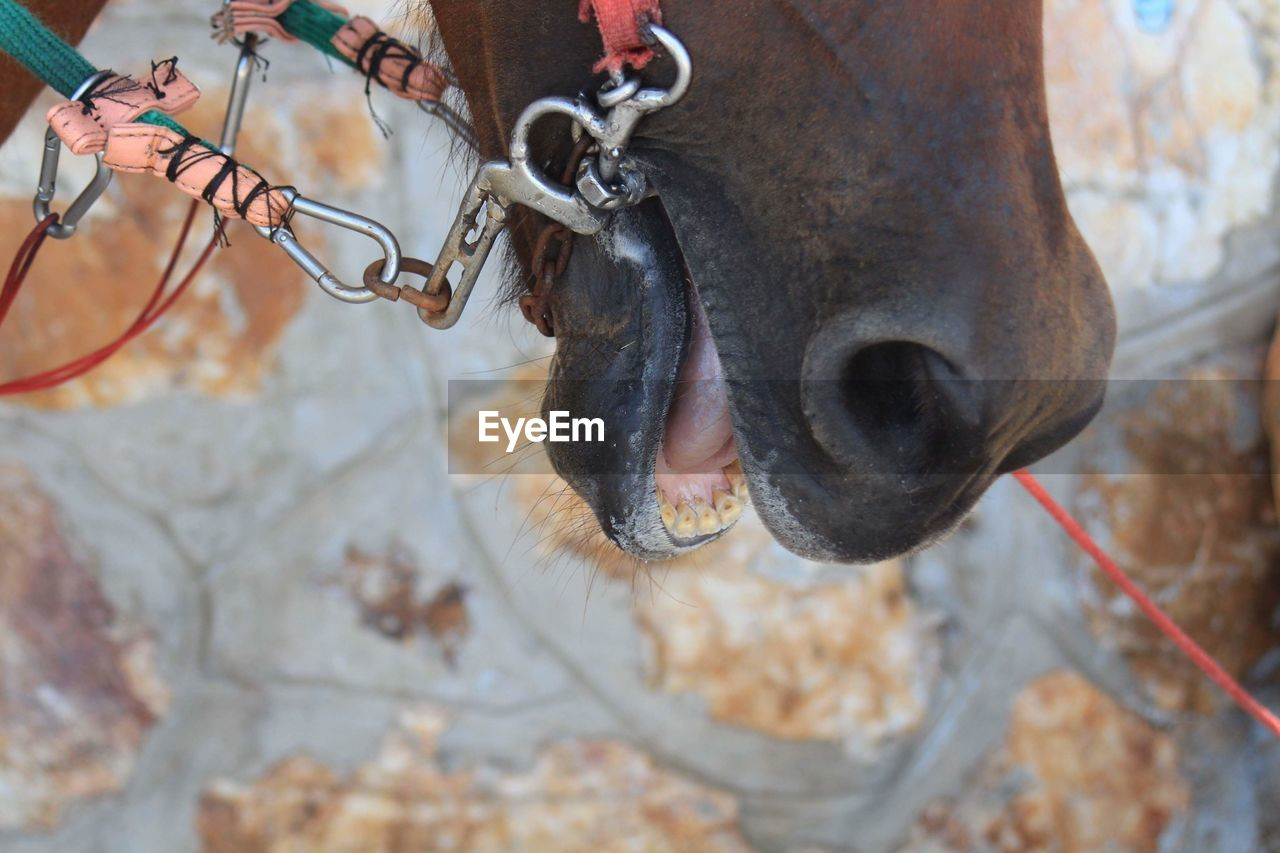 HIGH ANGLE VIEW OF A HORSE