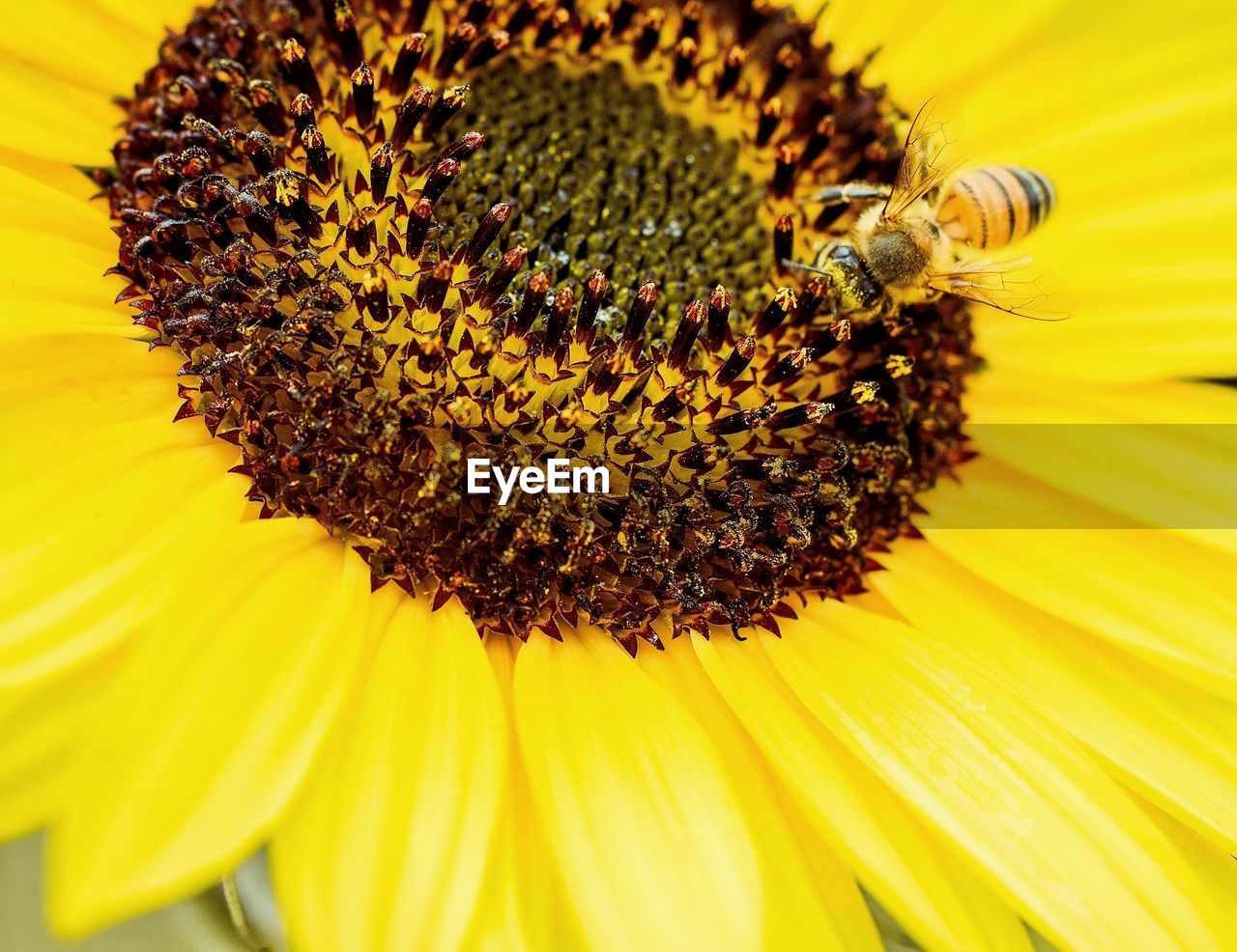 flower, flowering plant, petal, flower head, fragility, pollen, vulnerability, yellow, beauty in nature, freshness, inflorescence, growth, close-up, plant, insect, invertebrate, coneflower, no people, sunflower, outdoors, pollination